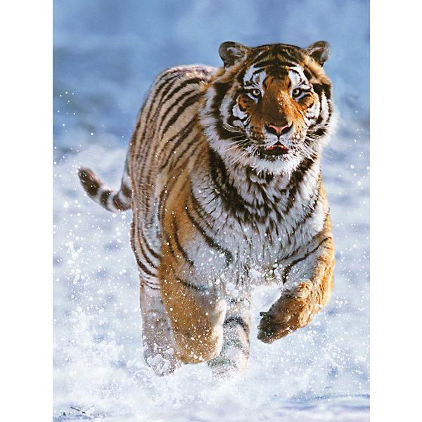 Пазл «Тигр на снегу» 500 деталей, RavensburgerПазлы для детей постарше<br>Пазл «Тигр на снегу» 500 деталей, Ravensburger (Равенсбургер) отличается высоким качеством изображения. На нем видна каждая деталь хищника. Могучий тигр стремительно несется по снегу, который взмывает в воздух от каждого движения хищника. Результат принесет ребенку радость собственных достижений и удовольствие от красочной картины! <br><br>Характеристики:<br>-Элементы идеально соединяются друг с другом, не отслаиваются с течением времени<br>-Высочайшее качество картона и полиграфии <br>-Матовая поверхность исключает отблески<br>-Развивает: память, мышление, внимательность, усидчивость, мелкая моторика, восприятие форм и цветов<br>-Занимательное времяпрепровождение для всей семьи<br>-Для сохранения в собранном виде можно использовать скотч или специальный клей для пазлов (в комплект не входит)<br><br>Дополнительная информация:<br>-Материал: плотный картон, бумага<br>-Размер собранного пазла: 49х36 см<br>-Размер упаковки: 34х23х4 см<br>-Вес упаковки: 600 г<br><br>Для детей собирание пазлов – это интересная и полезная игра, а для взрослых — прекрасная возможность провести время вместе со своими детьми!<br><br>Пазл «Тигр на снегу» 500 деталей, Ravensburger (Равенсбургер) можно купить в нашем магазине.<br><br>Ширина мм: 335<br>Глубина мм: 231<br>Высота мм: 37<br>Вес г: 550<br>Возраст от месяцев: 144<br>Возраст до месяцев: 1200<br>Пол: Унисекс<br>Возраст: Детский<br>Количество деталей: 500<br>SKU: 1481259
