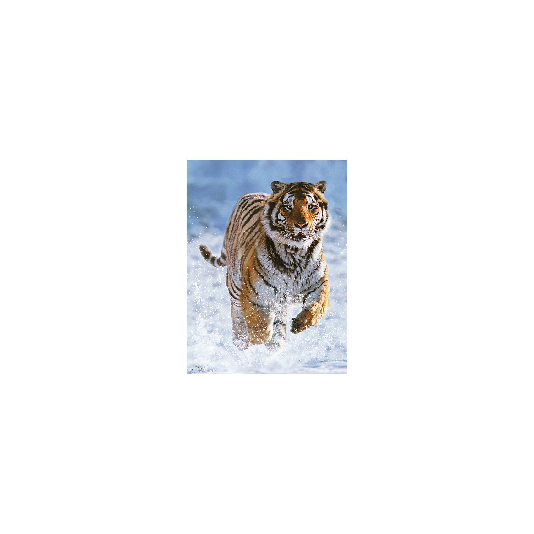 Пазл «Тигр на снегу» 500 деталей, RavensburgerКлассические пазлы<br>Пазл «Тигр на снегу» 500 деталей, Ravensburger (Равенсбургер) отличается высоким качеством изображения. На нем видна каждая деталь хищника. Могучий тигр стремительно несется по снегу, который взмывает в воздух от каждого движения хищника. Результат принесет ребенку радость собственных достижений и удовольствие от красочной картины! <br><br>Характеристики:<br>-Элементы идеально соединяются друг с другом, не отслаиваются с течением времени<br>-Высочайшее качество картона и полиграфии <br>-Матовая поверхность исключает отблески<br>-Развивает: память, мышление, внимательность, усидчивость, мелкая моторика, восприятие форм и цветов<br>-Занимательное времяпрепровождение для всей семьи<br>-Для сохранения в собранном виде можно использовать скотч или специальный клей для пазлов (в комплект не входит)<br><br>Дополнительная информация:<br>-Материал: плотный картон, бумага<br>-Размер собранного пазла: 49х36 см<br>-Размер упаковки: 34х23х4 см<br>-Вес упаковки: 600 г<br><br>Для детей собирание пазлов – это интересная и полезная игра, а для взрослых — прекрасная возможность провести время вместе со своими детьми!<br><br>Пазл «Тигр на снегу» 500 деталей, Ravensburger (Равенсбургер) можно купить в нашем магазине.<br><br>Ширина мм: 335<br>Глубина мм: 231<br>Высота мм: 37<br>Вес г: 550<br>Возраст от месяцев: 144<br>Возраст до месяцев: 1200<br>Пол: Унисекс<br>Возраст: Детский<br>Количество деталей: 500<br>SKU: 1481259