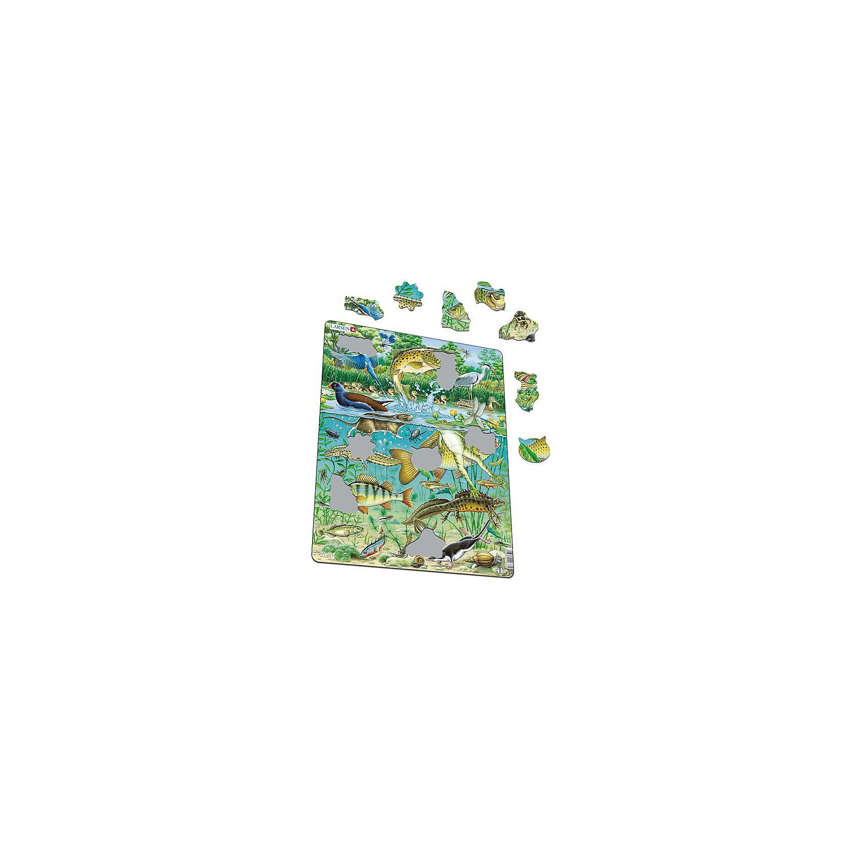 Пазл Пруд, 50 деталей, LarsenПазлы для малышей<br>Пазл Пруд, 50 деталей, Larsen (Ларсен) – это высококачественный обучающий пазл-рамка серии «Флора и Фауна».<br>Яркий красивый пазл-рамка Пруд – это пазл на котором с фотографической точностью прорисованы обитатели и растительный мир пруда. Пазл имеет специальную рамку с подложкой, на которой выдавлены контуры деталей, что облегчит процесс сборки. Детали пазла изготовлены из высококачественного плотного трехслойного картона. Они не деформируются, хорошо сцепляются друг с другом, не расслаиваются. Рисунок не стирается. Занятия по сборке пазла развивают образное и логическое мышление, пространственное воображение, память, внимание, усидчивость, координацию движений и мелкую моторику.<br><br>Дополнительная информация:<br><br>- Количество деталей: 50<br>- Размер собранной картинки: 36,5х28,5 см.<br>- Материал: плотный трехслойный картон<br>- Размер упаковки: 36,5х0,5х28,5 см.<br><br>Пазл Пруд, 50 деталей, Larsen (Ларсен) можно купить в нашем интернет-магазине.<br><br>Ширина мм: 365<br>Глубина мм: 285<br>Высота мм: 43<br>Вес г: 300<br>Возраст от месяцев: 48<br>Возраст до месяцев: 72<br>Пол: Унисекс<br>Возраст: Детский<br>Количество деталей: 80<br>SKU: 1604371