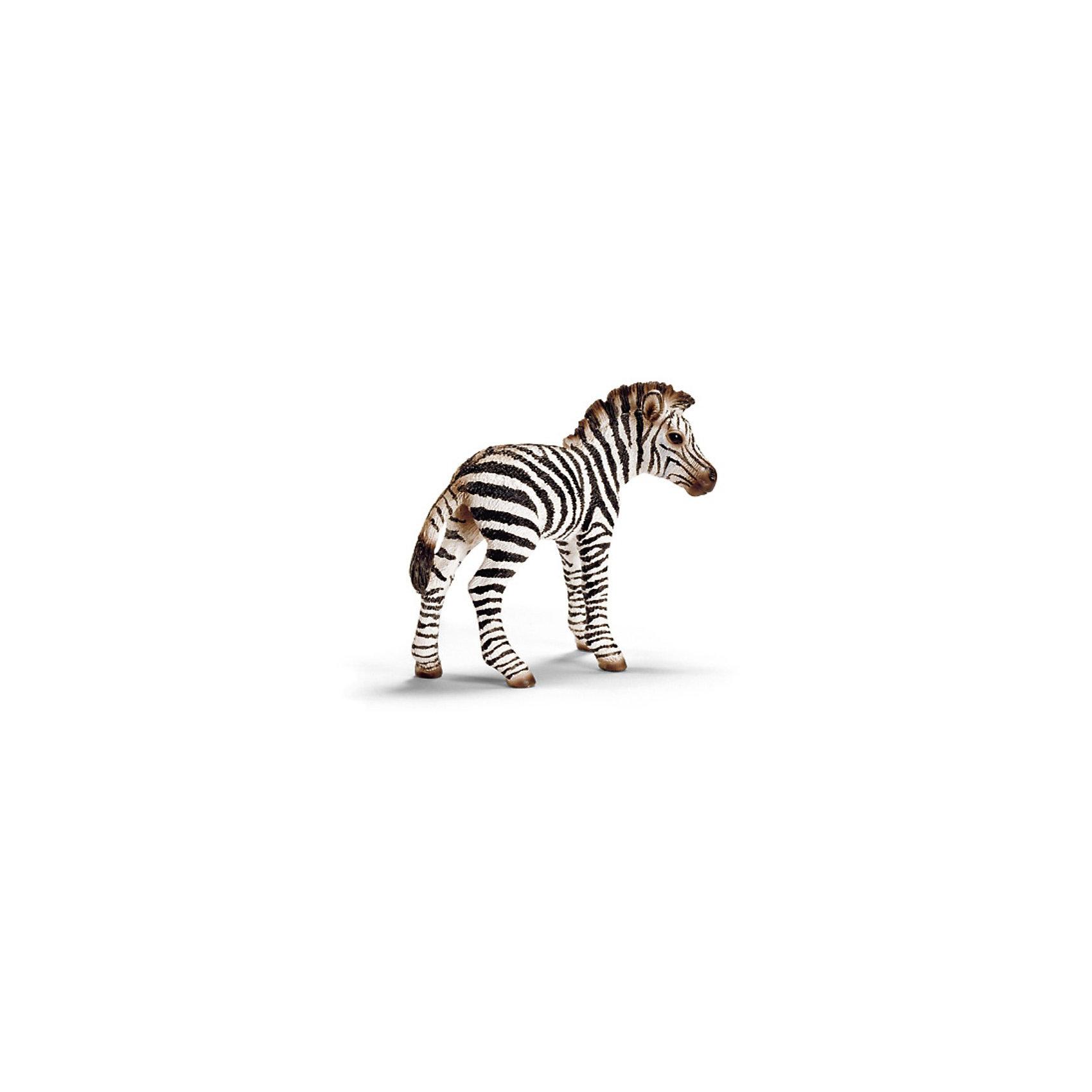 Schleich Детеныш зебры. Серия Дикие животныеМир животных<br>Schleich (Шляйх), детеныш зебры. Серия Дикие животные. <br><br>Характеристика:<br><br>• Материал: резина, пластик.  <br>• Размер фигурки: 7,1х2,9х6,2 см. <br>• Фигурка прекрасно детализирована.<br>• Реалистично раскрашена вручную. <br><br>Очаровательный детеныш зебры очень похож на настоящую живую лошадь, отлично детализирован и реалистично раскрашен. Игрушки серии Дикие животные от немецкого бренда Schleich изготовлены из высококачественных экологичных материалов, с применением только безопасных, нетоксичных красителей. Собери всю коллекцию Schleich и познакомься поближе с такими удивительными дикими и домашними животными! <br><br>Schleich (Шляйх), детеныша зебры, серия Дикие животные, можно купить в нашем интернет-магазине.<br><br>Ширина мм: 102<br>Глубина мм: 86<br>Высота мм: 22<br>Вес г: 26<br>Возраст от месяцев: 36<br>Возраст до месяцев: 96<br>Пол: Унисекс<br>Возраст: Детский<br>SKU: 1821339