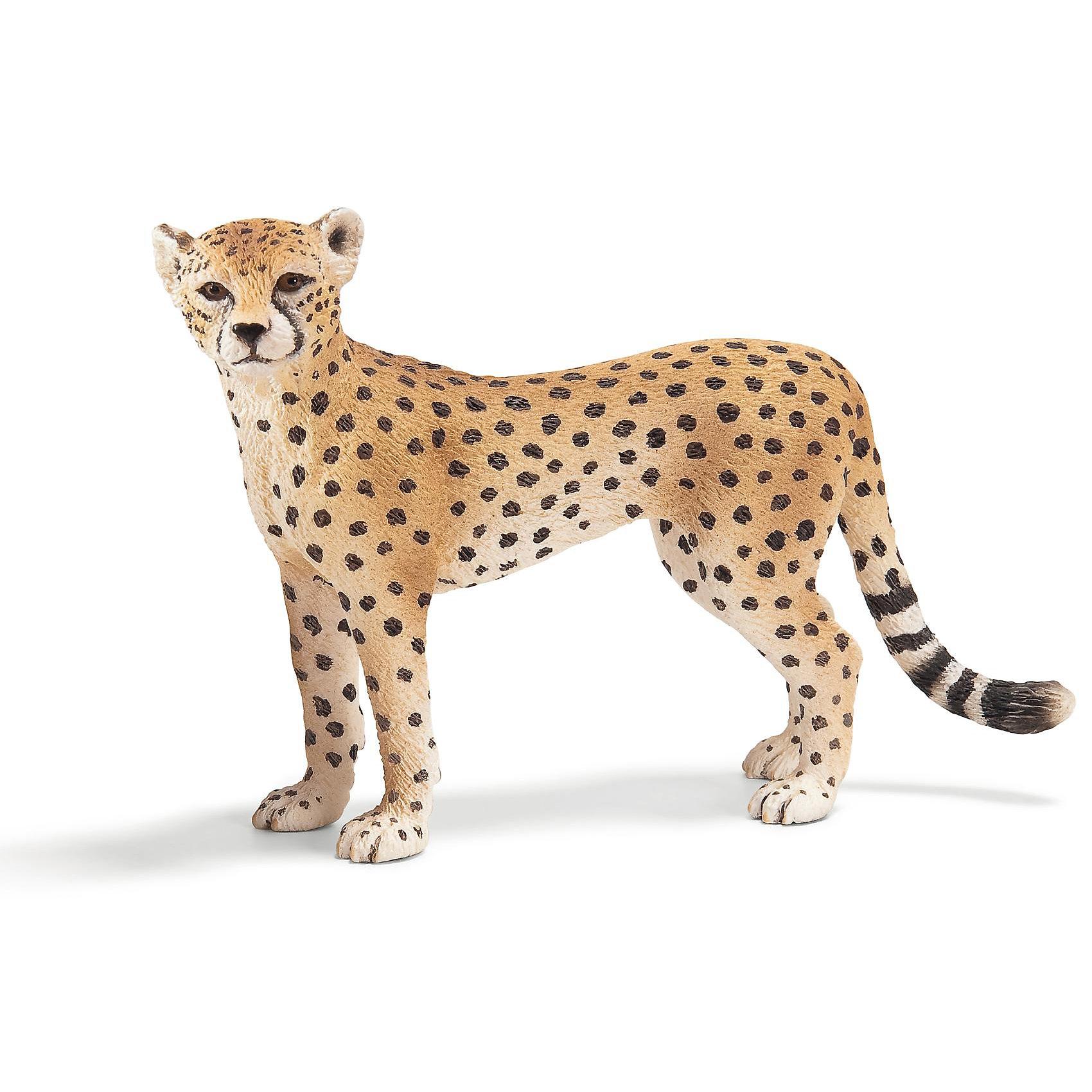 Самка гепарда, SchleichМир животных<br>Все фигурки выполнены из высококачественных материалов с максимальной точностью и раскрашены в ручную. Не вызывает аллергии.  <br><br>Великолепно выполненные и раскрашенные вручную животные, созданные при тесном сотрудничестве с Берлинским зоопарком, никого не оставят равнодушными. <br><br>В разработке каждой фигурки компания Schleich (Шляйх) опирается на исследования в области педагогики, создавая маленькие произведения для маленьких ручек.<br><br>Дополнительная информация:<br><br>Материал: каучуковый пластик<br>Размеры: 9,8 x 3,3 x 6,5 см<br><br>Самку гепарда, Schleich (Шляйх) можно купить в нашем магазине.<br><br>Ширина мм: 107<br>Глубина мм: 86<br>Высота мм: 27<br>Вес г: 32<br>Возраст от месяцев: 36<br>Возраст до месяцев: 96<br>Пол: Унисекс<br>Возраст: Детский<br>SKU: 1978649