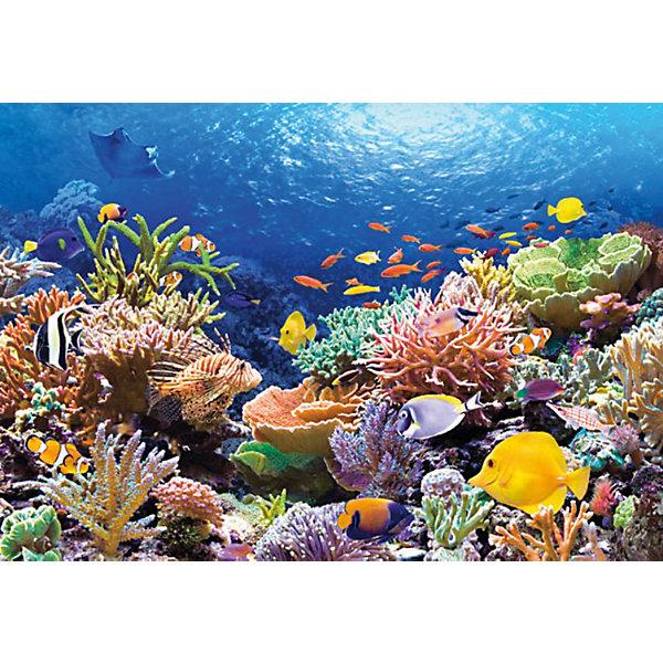 Пазл Коралловый риф, 1000 деталей, CastorlandПазлы классические<br>Пазл Коралловый риф, 1000 деталей, Castorland (Касторленд).<br><br>Дополнительная информация:<br><br>- Изображение: Коралловый риф.<br>- Количество деталей: 1000<br>- Материал: плотный картон<br>- Размер собранного пазла: 680x470 мм <br>- Размер коробки: 350x250x52 мм<br>- Вес: 600 г.<br><br>Пазл Коралловый риф, 1000 деталей, Castorland (Касторленд) можно купить в нашем интернет-магазине.<br>Ширина мм: 350; Глубина мм: 250; Высота мм: 50; Вес г: 600; Возраст от месяцев: 168; Возраст до месяцев: 1188; Пол: Унисекс; Возраст: Детский; Количество деталей: 1000; SKU: 2328151;