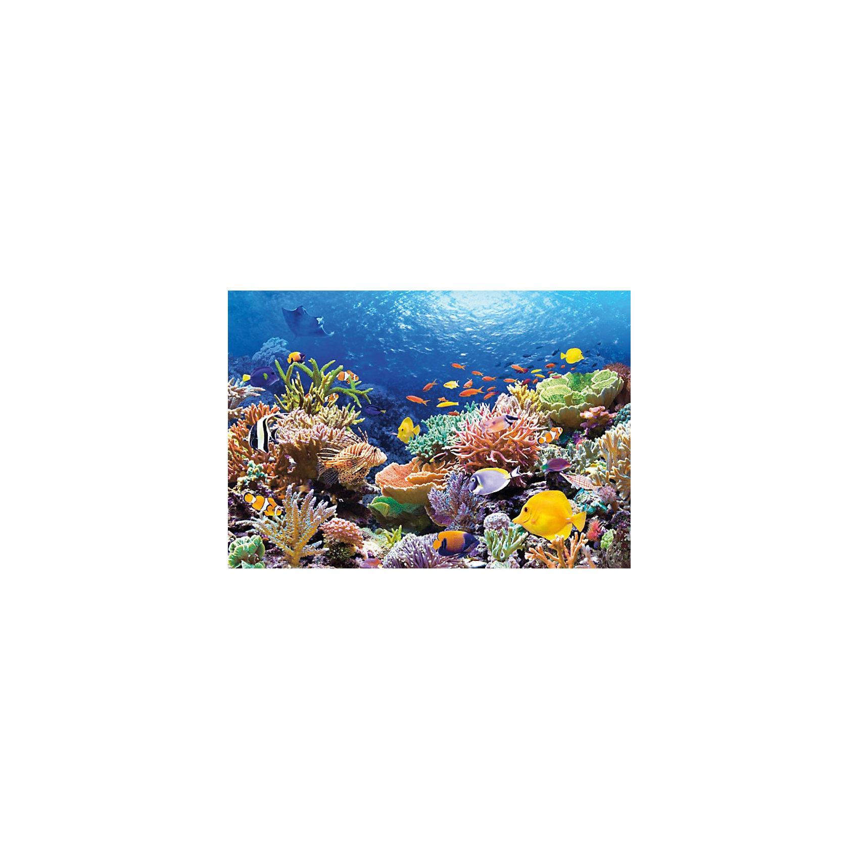 Castorland Пазл Коралловый риф, 1000 деталей, Castorland castorland пазл забавный экскаватор 12 деталей maxi castorland