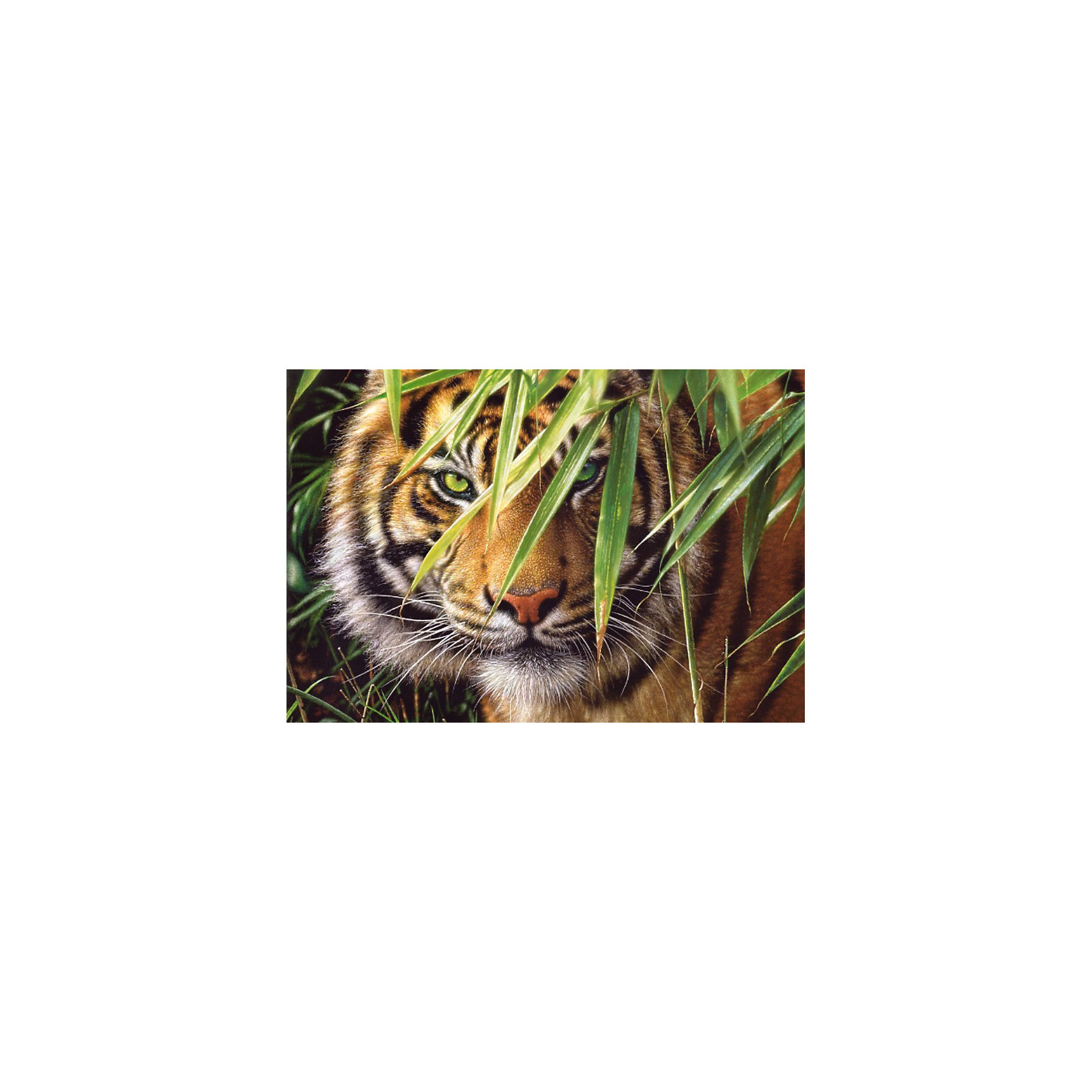 Пазл Тигр, 1500 деталей, CastorlandПазл Тигр, 1500 деталей, Castorland (Касторленд).<br><br>Дополнительная информация:<br><br>- Изображение: Тигр<br>- Количество деталей: 1500<br>- Материал: плотный картон<br>- Размер собранного пазла:   680x470 мм<br>- Размер коробки:  350x250x52 мм<br>- Вес: 850 г.<br><br>Пазл Тигр, 1500 деталей, Castorland (Касторленд) можно купить в нашем интернет-магазине.<br><br>Ширина мм: 350<br>Глубина мм: 250<br>Высота мм: 50<br>Вес г: 850<br>Возраст от месяцев: 168<br>Возраст до месяцев: 1188<br>Пол: Унисекс<br>Возраст: Детский<br>Количество деталей: 1500<br>SKU: 2328176