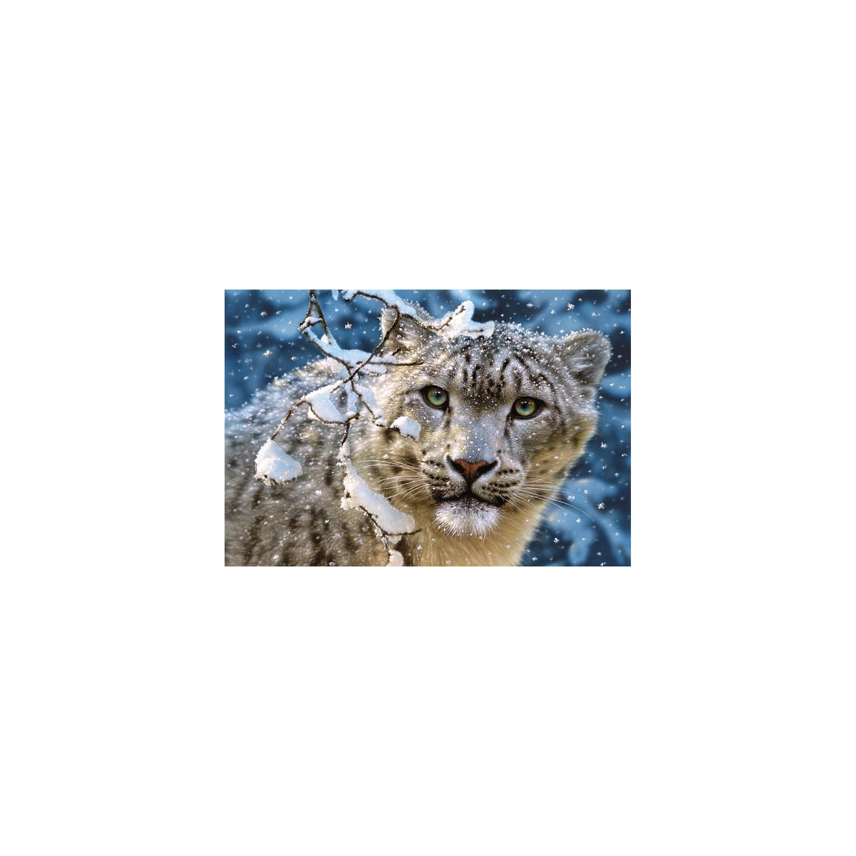 Пазл Снежный леопард, 1500 деталей, CastorlandПазл Снежный леопард, 1500 деталей, Castorland (Касторленд).<br><br>Дополнительная информация:<br><br>- Изображение: Снежный леопард<br>- Количество деталей: 1500<br>- Материал: плотный картон<br>- Размер собранного пазла:   680x470 мм<br>- Размер коробки:  350x250x52 мм<br>- Вес: 850 г.<br><br>Пазл Снежный леопард, 1500 деталей, Castorland можно купить в нашем интернет-магазине.<br><br>Ширина мм: 350<br>Глубина мм: 250<br>Высота мм: 50<br>Вес г: 850<br>Возраст от месяцев: 168<br>Возраст до месяцев: 1188<br>Пол: Унисекс<br>Возраст: Детский<br>Количество деталей: 1500<br>SKU: 2328177