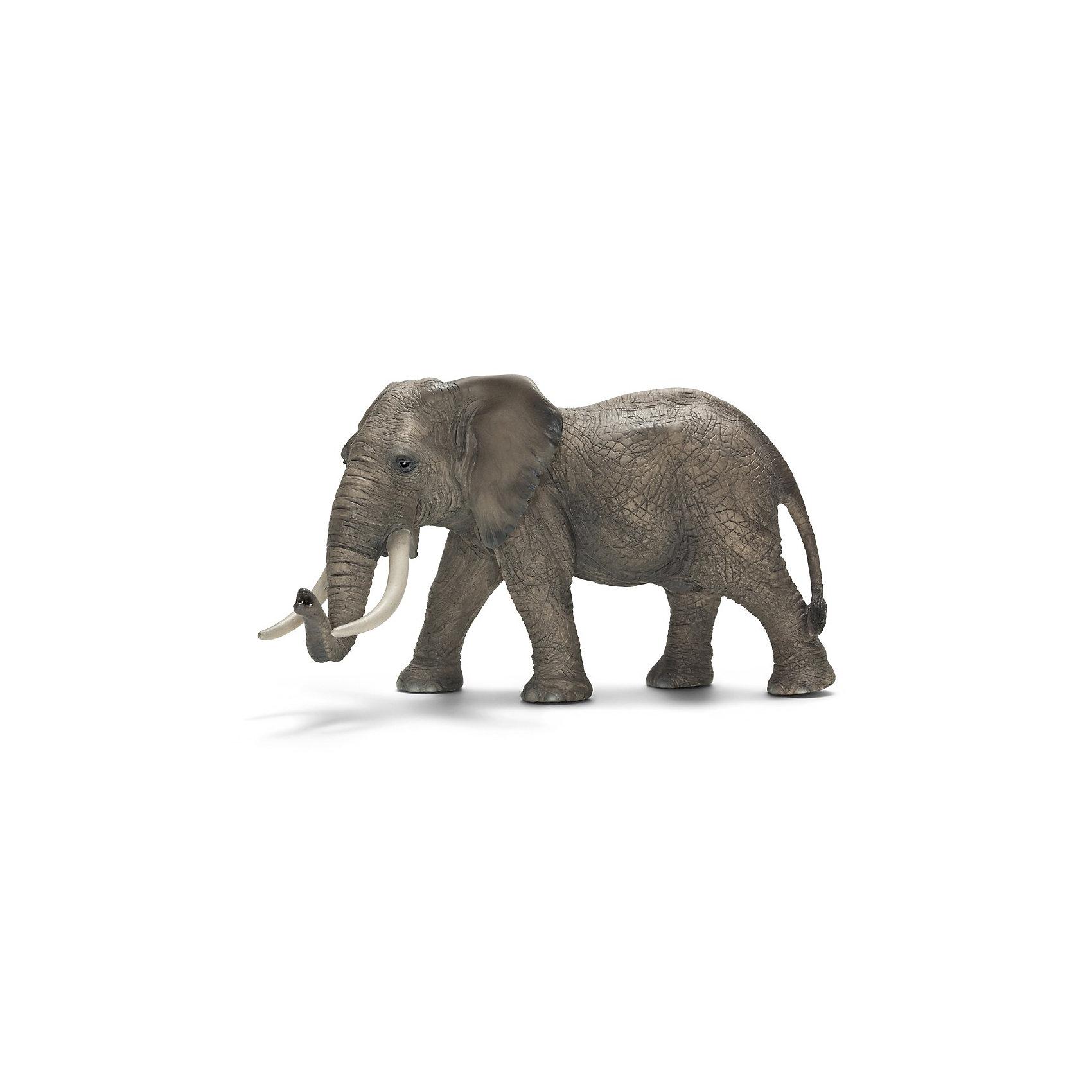 Африканский слон: самец, SchleichАфриканский слон, самец – крупнейший представитель семейства слоновых. Он занесен в «Книгу рекордов Гиннесса» как самое крупное наземное млекопитающее. Длина тела африканского слона достигает 6—7,5 м, высота  2,4—3,5 м. Средняя масса тела самцов африканского слона — 5 тонн. <br>Слоны могут потратить до шестнадцати часов в день в поисках травы, ветвей, фруктов и других растений. Слоны имеют толстую, но эластичную кожу, длинный хобот и два огромных бивня.<br>У африканского слона есть интересная особенность – у африканского слона – 4 пальца на передних ногах и 5 на задних. С помощью своего длинного и гибкого хобота африканские слоны общаются друг с другом через осязание и обоняние. <br><br>Дополнительная информация:<br><br>- Размер товара: 11 x 19 x 10,5 см<br>- Материал: каучуковый пластик<br><br>Фигурку Африканского слона: самца, Schleich (Шляйх) можно купить в нашем магазине.<br><br>Ширина мм: 177<br>Глубина мм: 114<br>Высота мм: 86<br>Вес г: 365<br>Возраст от месяцев: 36<br>Возраст до месяцев: 96<br>Пол: Унисекс<br>Возраст: Детский<br>SKU: 2381511