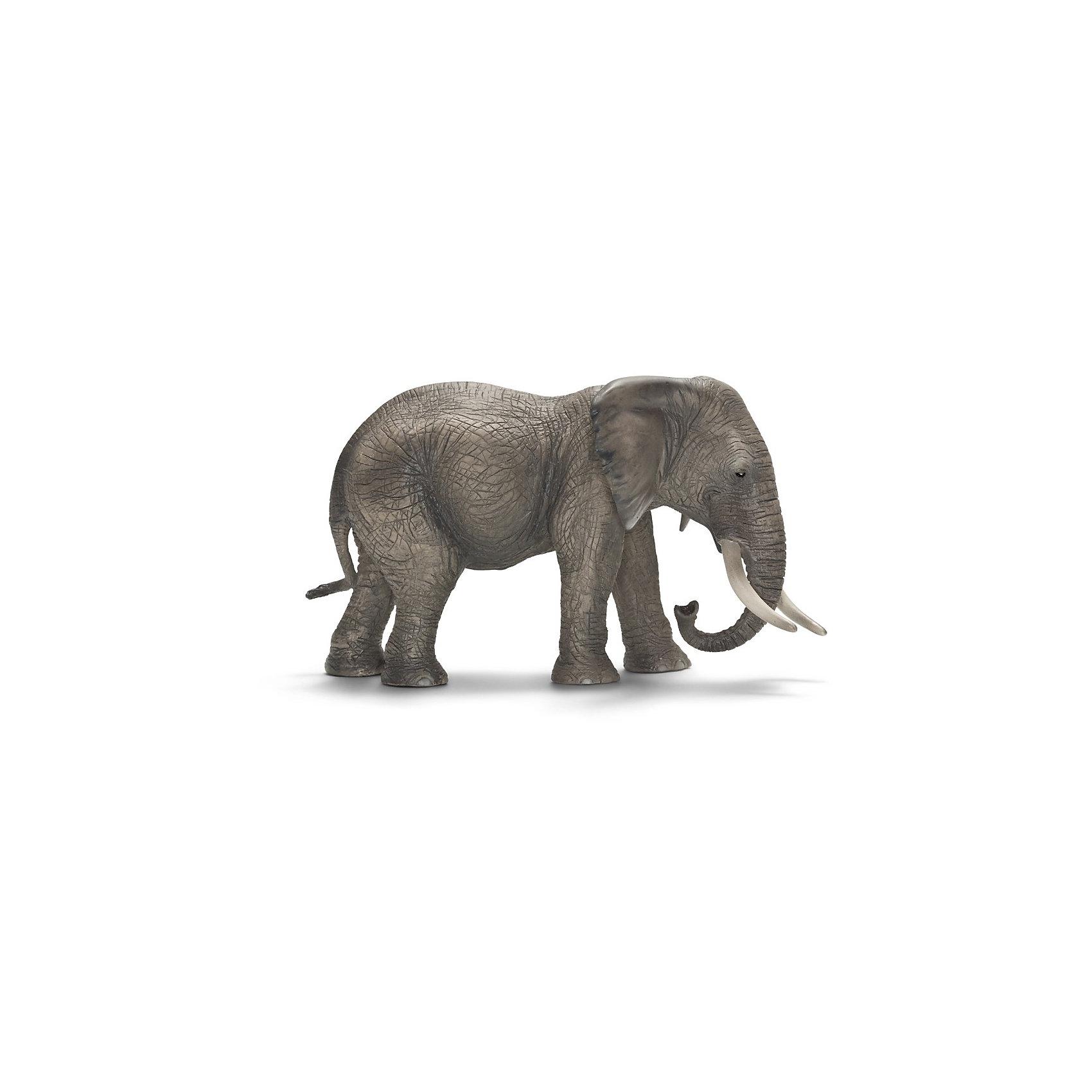 Африканский слон: самка, SchleichАфриканский слон – крупнейший представитель семейства слоновых. Он занесен в «Книгу рекордов Гиннесса» как самое крупное наземное млекопитающее. Длина тела африканского слона достигает 6—7,5 м, высота  2,4—3,5 м. Средняя масса тела самцов африканского слона — 5 тонн. <br>Слоны могут потратить до шестнадцати часов в день в поисках травы, ветвей, фруктов и других растений. Слоны имеют толстую, но эластичную кожу, длинный хобот и два огромных бивня.<br>У африканского слона есть интересная особенность – у африканского слона – 4 пальца на передних ногах и 5 на задних. С помощью своего длинного и гибкого хобота африканские слоны общаются друг с другом через осязание и обоняние. <br><br>Дополнительная информация:<br><br>- Размер товара: 17 ? 8.5 ? 9.5 см<br>- Материал: каучуковый пластик<br><br>Фигурку Африканского слона: самку, Schleich (Шляйх) можно купить в нашем магазине.<br><br>Ширина мм: 178<br>Глубина мм: 116<br>Высота мм: 76<br>Вес г: 320<br>Возраст от месяцев: 36<br>Возраст до месяцев: 96<br>Пол: Унисекс<br>Возраст: Детский<br>SKU: 2381512