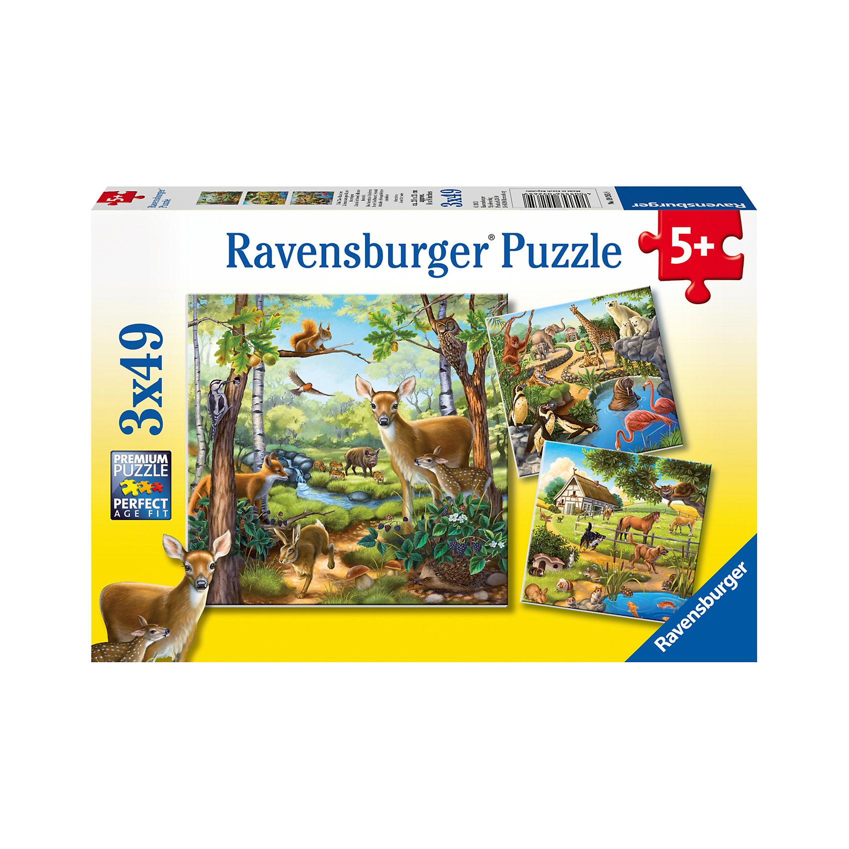 Пазл «Лес, зоопарк, домашние животные» 3х49 деталей, RavensburgerПазлы для малышей<br>Пазл «Лес, зоопарк, домашние животные»3х49 деталей, Ravensburger (Равенсбургер) – это увлекательное времяпрепровождение для Вашего ребенка!<br>В набор входит три красочных пазла с изображениями животных в лесу, в зоопарке и дома. Крупные и яркие детали пазла привлекут внимание маленьких детей и не потеряются. Собирая картинку, ребенок развивает логическое мышление, воображение, мелкую моторику и умение принимать самостоятельные решения. Пазлы Ravensburger неповторимы и уникальны тем, что для их изготовления используется картон наивысшего класса, благодаря которому сложенные головоломки не сгибаются, сам картон не отделяется от картинки, а сложенная картинка представляется абсолютно плоской и не деформируется даже спустя время. Прочные детали не ломаются. Каждая деталь имеет свою форму и подходит только на своё место. Матовая поверхность исключает неприятные отблески. Изготовлено из экологического сырья.<br><br>Дополнительная информация:<br><br>- Количество деталей: 3 пазла по 49 деталей<br>- Размер картинки: 18х18 см.<br>- Материал: прочный картон<br>- Размер коробки: 28 x 4 x 19 см.<br><br>Пазл «Лес, зоопарк, домашние животные»3х49 деталей, Ravensburger (Равенсбургер) можно купить в нашем интернет-магазине.<br><br>Ширина мм: 279<br>Глубина мм: 189<br>Высота мм: 39<br>Вес г: 351<br>Возраст от месяцев: 60<br>Возраст до месяцев: 84<br>Пол: Унисекс<br>Возраст: Детский<br>Количество деталей: 49<br>SKU: 2414744