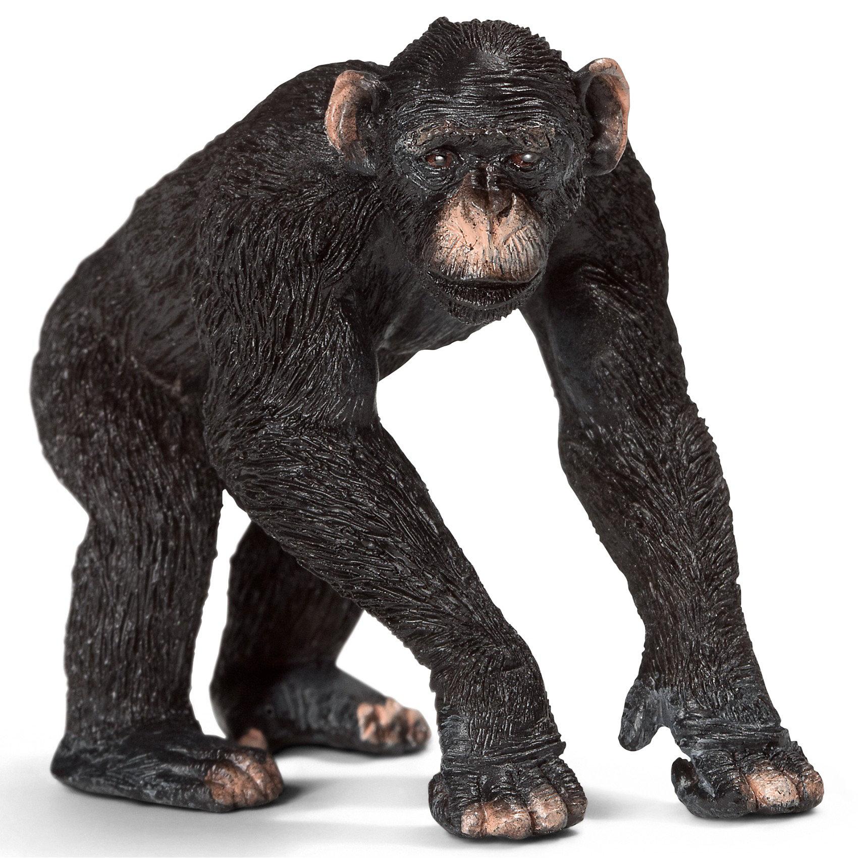 Schleich Шимпанзе, самец. Серия Дикие животныеМир животных<br>Schleich (Шляйх) самец шимпанзе из серии Дикие животные. Шимпанзе живут общинами, возглавляемые самцами. Шимпанзе используют  самодельные инструменты, чтобы отыскивать термитов. В основном эти обезьяны питаются вегетарианской пищей и могут перемещаться на двух ногах.<br><br>Дополнительная информация:<br><br>-фигурка раскрашена вручную и имеет тщательно проработанные черты<br>-размеры (ДхШхВ): 6,5х5х3,5 см<br><br>Фигурки из серии Дикие животные от Schleich (Шляйх) разработаны в сотрудничестве с Берлинским зоопарком и поэтому они очень реалистичны!<br><br>Игрушку самца шимпанзе вы можете купить в нашем магазине.<br><br>Ширина мм: 106<br>Глубина мм: 63<br>Высота мм: 2<br>Вес г: 37<br>Возраст от месяцев: 36<br>Возраст до месяцев: 96<br>Пол: Унисекс<br>Возраст: Детский<br>SKU: 2609254