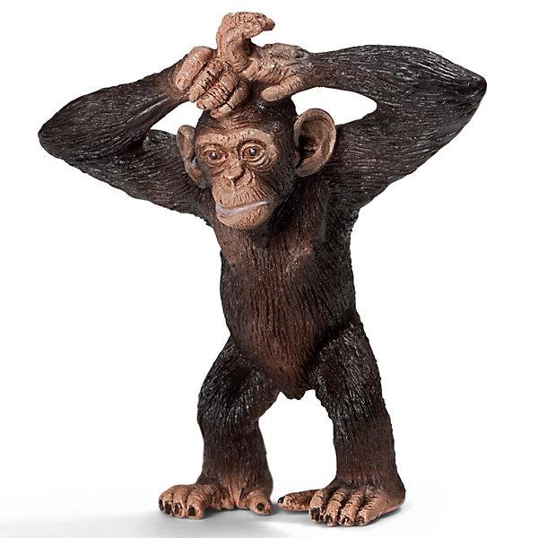 Schleich Шимпанзе, детеныш. Серия Дикие животныеМир животных<br>Schleich (Шляйх) Шимпанзе, детеныш. Серия Дикие животные. Молодые шимпанзе отличаются телесно-розоватым цветом кожи, с возрастом она темнеет. Детство длится до 9 лет, в этот период самка постепенно обучает детеныша секретам выживания в природе. Многие полезные навыки малыши получают, играя друг с другом и наблюдая за другими членами группы.<br><br>Дополнительная информация:<br><br>-Пластиковая  фигурка  в малейших подробностях передает внешние характеристики настоящего животного.<br>-размеры (ДхШхВ): 2,5х6х5,5 см<br><br>Игрушку Schleich (Шляйх) Шимпанзе, детеныш. Серия Дикие животные можно купить в нашем магазине.<br><br>Ширина мм: 68<br>Глубина мм: 67<br>Высота мм: 30<br>Вес г: 15<br>Возраст от месяцев: 36<br>Возраст до месяцев: 96<br>Пол: Унисекс<br>Возраст: Детский<br>SKU: 2609256