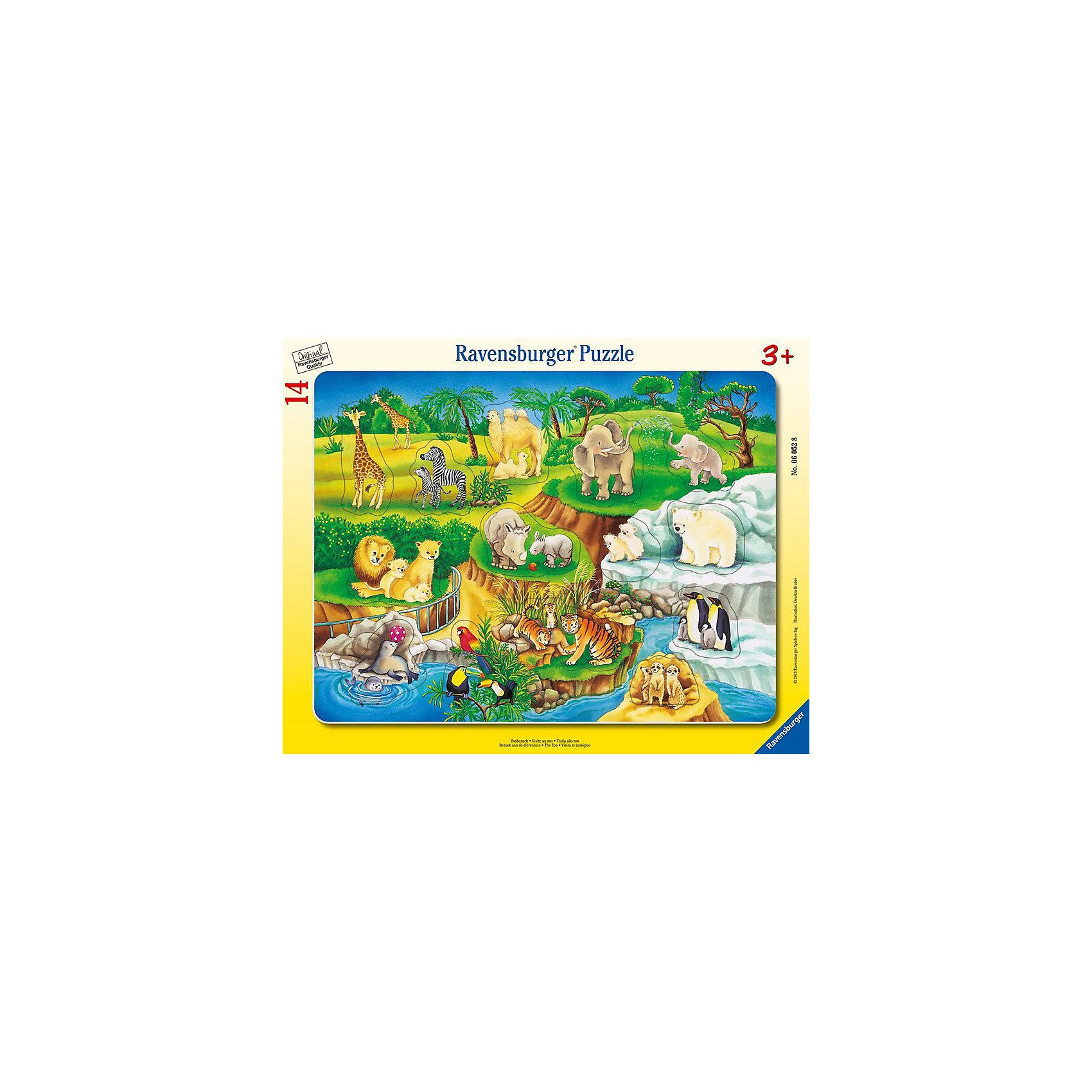 Пазл Зоопарк, 14 деталей, RavensburgerПазлы для малышей<br>Пазл Зоопарк, 14 деталей, Ravensburger (Равенсбургер) – это отличная развивающая игра-головоломка для детей.<br>Красочный пазл Зоопарк от немецкого производителя Ravensburger (Равенсбургер) состоит из 14 крупных картинок, изготовленных из качественного экологичного материала. Пазл познакомит ребенка с обитателями зоопарка. Малышу предстоит правильно разместить животных с детенышами на картинке с изображением территории зоопарка. Процесс сборки пазла не только увлечет ребенка, но поможет развить мелкую моторику рук, наблюдательность, логическое мышление, усидчивость, терпение, аккуратность, внимание и познакомит с окружающим миром. Пазлы Ravensburger (Равенсбургер) - это высочайшее качество картона и полиграфии. Детали пазла не ломаются, не подвергаются деформации при сборке. Элементы пазла идеально соединяются друг с другом, не отслаиваются с течением времени. Матовая поверхность исключает отблески.<br><br>Дополнительная информация:<br><br>- Количество деталей: 14<br>- Размер картинки: 33х25 см.<br>- Материал: прочный, качественный картон<br>- Размер упаковки: 38 x 30 x 1 см.<br><br>Пазл Зоопарк, 14 деталей, Ravensburger (Равенсбургер) можно купить в нашем интернет-магазине.<br><br>Ширина мм: 375<br>Глубина мм: 289<br>Высота мм: 7<br>Вес г: 296<br>Возраст от месяцев: 36<br>Возраст до месяцев: 60<br>Пол: Унисекс<br>Возраст: Детский<br>Количество деталей: 14<br>SKU: 2886866