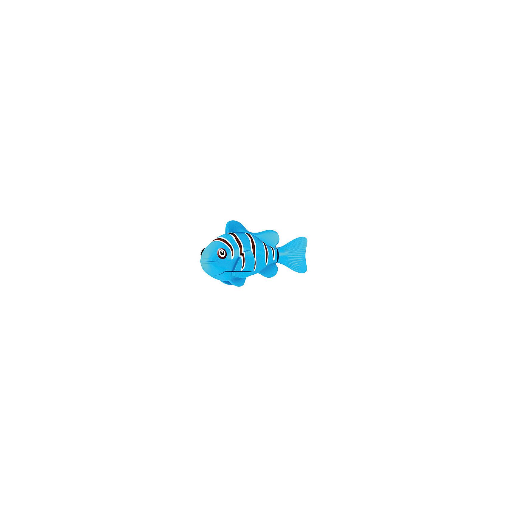 РобоРыбка Клоун голубая, RoboFishРоборыбки и русалки<br>Голубая Рыбка клоун при погружении в аквариум или другою емкостью с водой РобоРыбка начинает плавать – опускаясь ко дну и поднимаясь к поверхности воды. Игрушка работает от двух алкалиновых батареек А76 или RL44, которые входят в комплект (две установлены в игрушку и 2 запасные)<br><br>Ширина мм: 435<br>Глубина мм: 405<br>Высота мм: 240<br>Вес г: 216<br>Возраст от месяцев: 60<br>Возраст до месяцев: 144<br>Пол: Унисекс<br>Возраст: Детский<br>SKU: 2999505