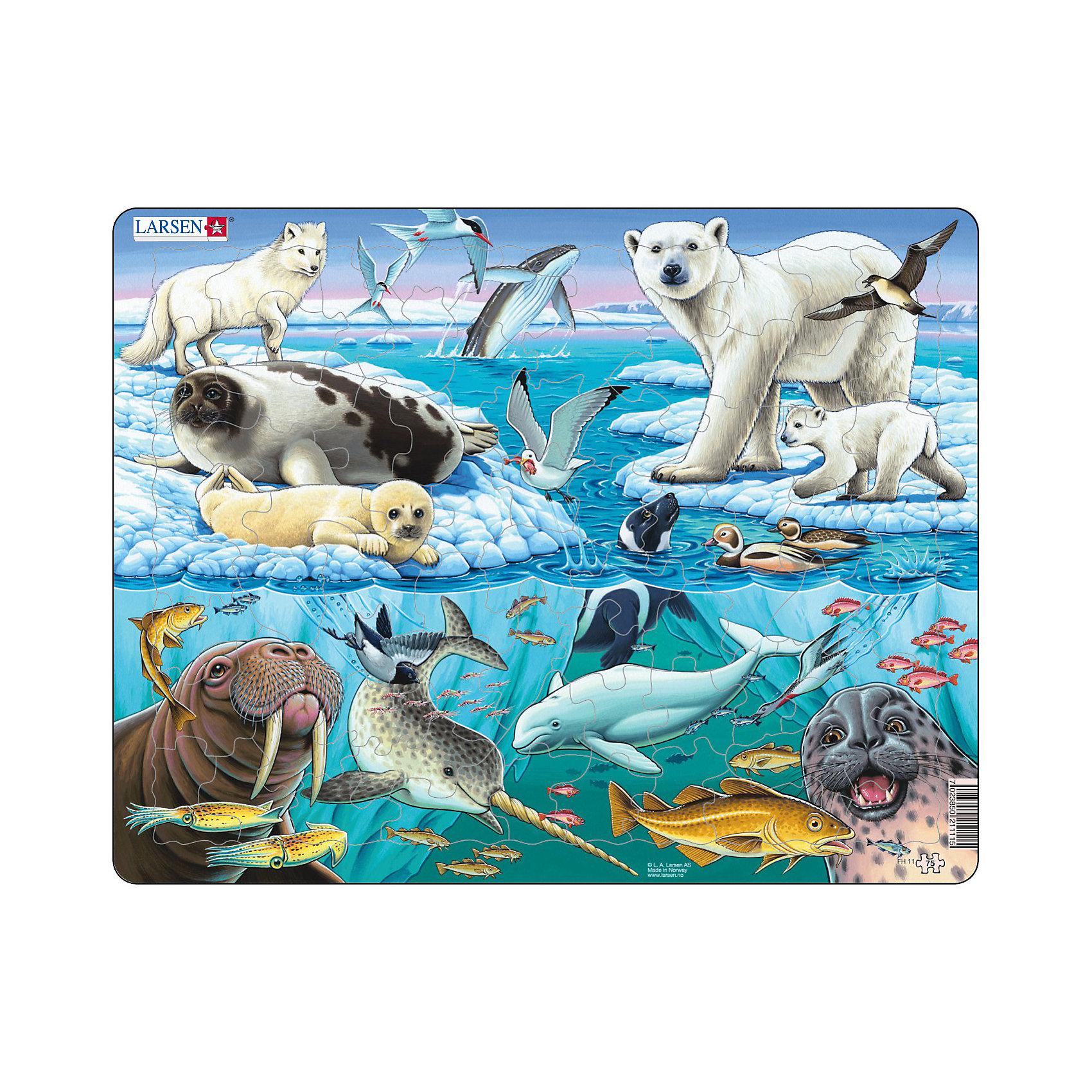Пазл Арктика, 75 деталей, LarsenПазлы для малышей<br>Пазл Арктика, 75 деталей, Larsen (Ларсен) – это высококачественный обучающий пазл-рамка серии «Флора и Фауна».<br>Пазл-рамка Арктика – это яркий и красивый пазл, состоящий из 75 деталей, на котором с фотографической точностью прорисованы обитатели Арктики. Пазл имеет специальную рамку с подложкой, на которой выдавлены контуры необходимых деталей, что облегчит процесс сборки. Детали пазла изготовлены из высококачественного плотного трехслойного картона. Они не деформируются, хорошо сцепляются друг с другом, не расслаиваются. Рисунок не стирается. Занятия по сборке пазла развивают образное и логическое мышление, пространственное воображение, память, внимание, усидчивость, координацию движений и мелкую моторику.<br><br>Дополнительная информация:<br><br>- Количество деталей: 75<br>- Размер собранной картинки: 36,5х28,5 см.<br>- Материал: плотный трехслойный картон<br>- Размер упаковки: 36,5х0,5х28,5 см.<br><br>Пазл Арктика, 75 деталей, Larsen (Ларсен) можно купить в нашем интернет-магазине.<br><br>Ширина мм: 365<br>Глубина мм: 289<br>Высота мм: 10<br>Вес г: 320<br>Возраст от месяцев: 60<br>Возраст до месяцев: 84<br>Пол: Унисекс<br>Возраст: Детский<br>Количество деталей: 75<br>SKU: 3206503