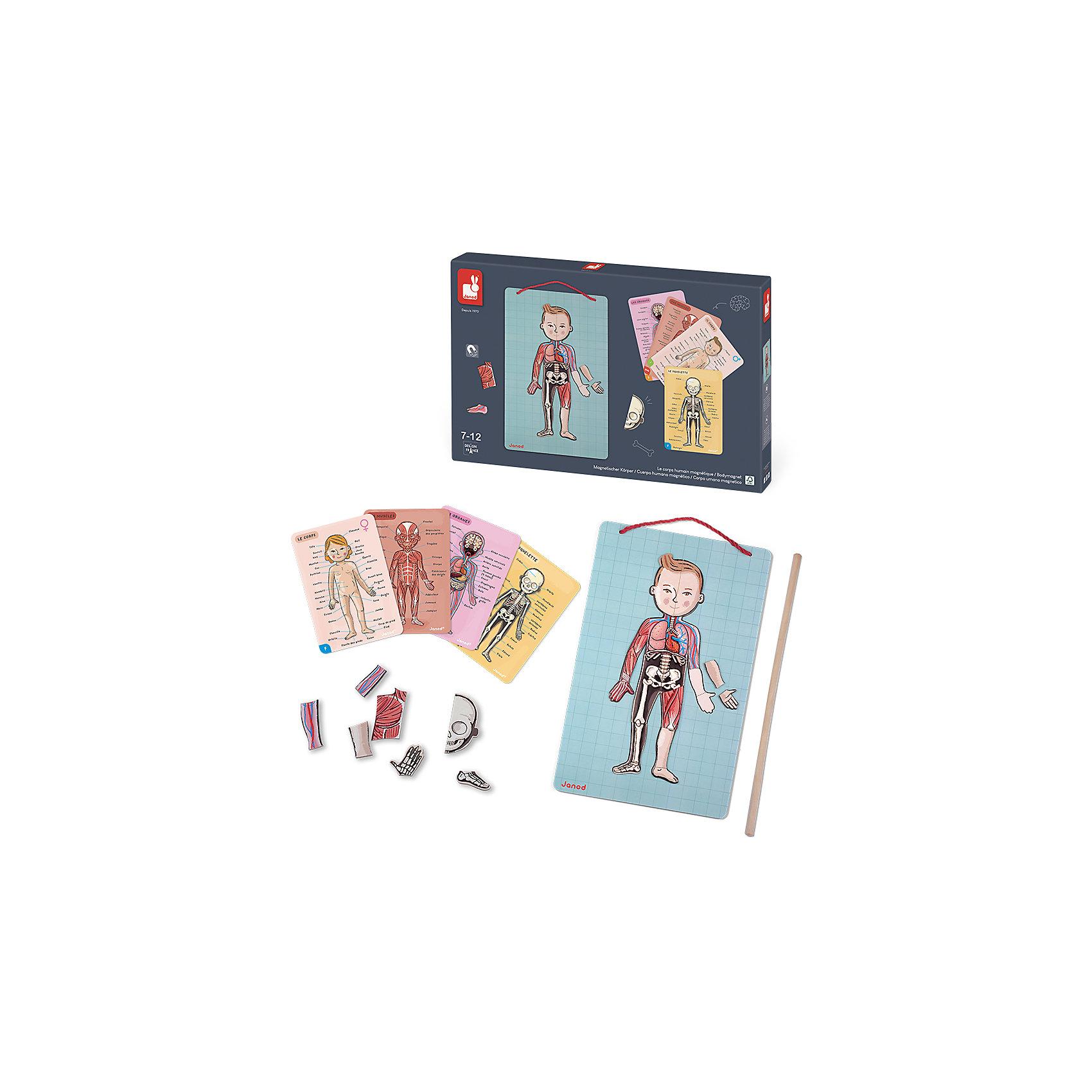Карточки -магниты Части тела, JanodРазвивающие игры<br>Магнитные фигурки - отличный способ развивать творческие способности ребенка в игровой форме. Эта игра очень удобна - ее можно брать с собой в дорогу, благодаря продуманной форме хранится она очень компактно. Она развивает также мелкую моторику, художественный вкус, воображение, логическое мышление, цветовосприятие. Такая игра надолго занимает детей и помогает увлекательно провести время!<br>Игра из магнитных деталей Части тела сделана в виде карточек, а также содержатся магнитов разных форм и цветов, изображающих внутренние органы и части тела. Игра разработана опытными специалистами, сделана из высококачественных материалов, безопасных для детей.<br><br>Дополнительная информация:<br><br>материал: картон;<br>размер: 43 х 5 х 28 см;<br>комплектация: указка, магнитная доска с фигурой человека, 76 магнитов , 4 карточки на русском языке с подробным описанием строения человеческого тела .<br><br>Карточки -магниты Части тела от компании Janod можно купить в нашем магазине.<br><br>Ширина мм: 430<br>Глубина мм: 280<br>Высота мм: 50<br>Вес г: 1890<br>Возраст от месяцев: 84<br>Возраст до месяцев: 144<br>Пол: Унисекс<br>Возраст: Детский<br>SKU: 3219333