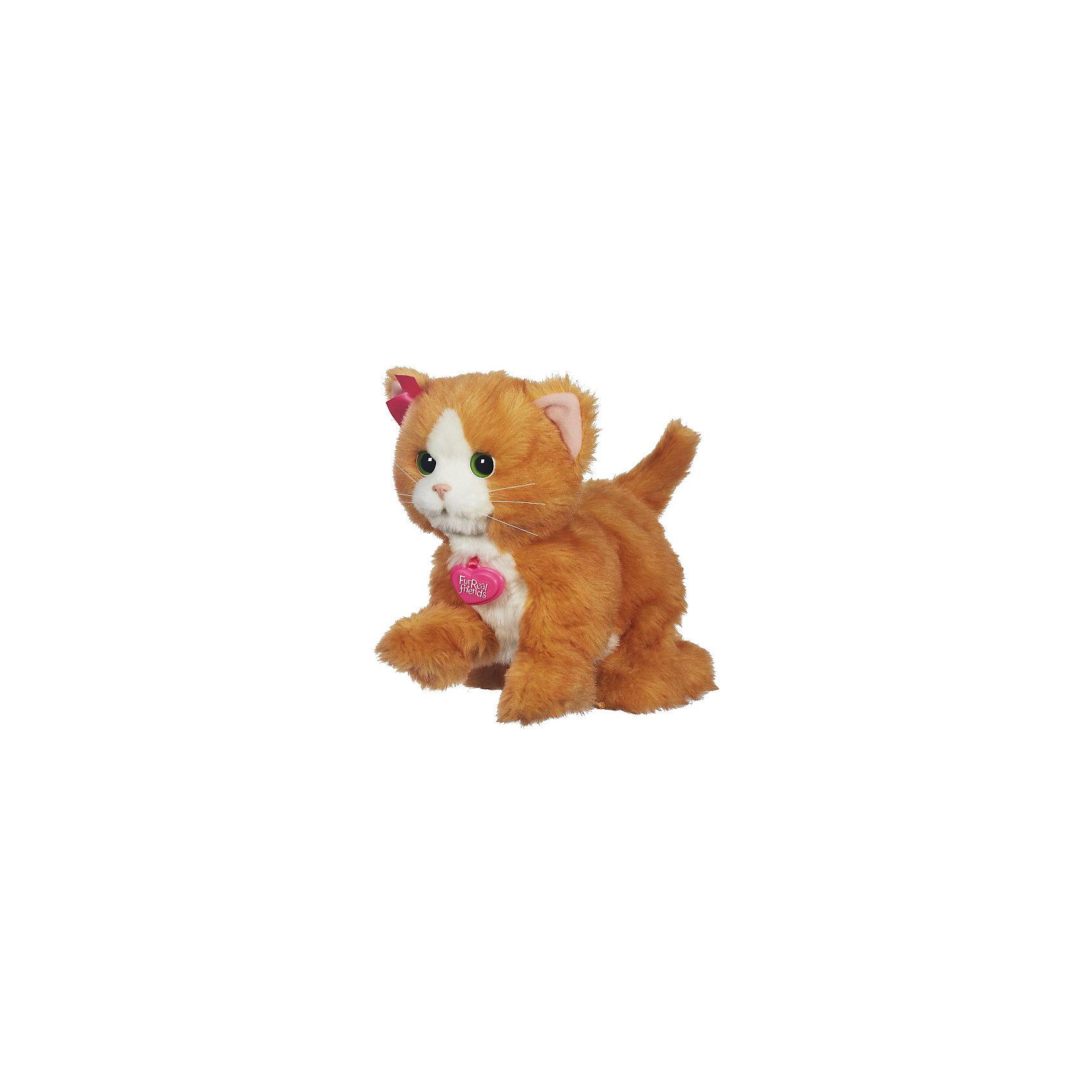 Игривый котенок  Дэйзи,  FurRealИнтерактивные мягкие игрушки<br>Игривый котенок  Дэйзи,  FurReal - это милый пушистый бело-рыжий котёнок с зелёными глазами! Сложно поверить, что он не настоящий - он выглядит как живой - даже усы торчат в разные стороны! А сколько всего он умеет делать! Если перед ним помахать его игрушкой или погладить лобик - он моргает, шевелит лапками, пытаясь поймать игрушку. А если нажать на спинку или на переднюю правую лапку - он будет мурлыкать, нажми дважды - и котёнок пропоёт весёлую песенку!<br><br>Дополнительная информация:<br><br>- Игрушка сделана из пластика, обита искусственным мехом.<br>- В комплекте также метёлка - игрушка для котёнка Дейзи FurReal Friends.<br>- Для работы иггрушки необходимы 4 батарейки типа  AA / LR6 1.5V (пальчиковые, входят в комплект).<br>- Размер коробки: 30.5 х 20.3 х 34.3 см.<br>- Размер самой игрушки: высота - около 30 см.<br>- Предназначена для детей от 4 лет.<br><br>Этот очаровательный игривый котенок готов играть с тобой весь день напролет! <br><br>Игривого котенка  Дэйзи,  FurReal можно купить в нашем магазине.<br><br>Ширина мм: 344<br>Глубина мм: 305<br>Высота мм: 205<br>Вес г: 1170<br>Возраст от месяцев: 48<br>Возраст до месяцев: 84<br>Пол: Женский<br>Возраст: Детский<br>SKU: 3222539