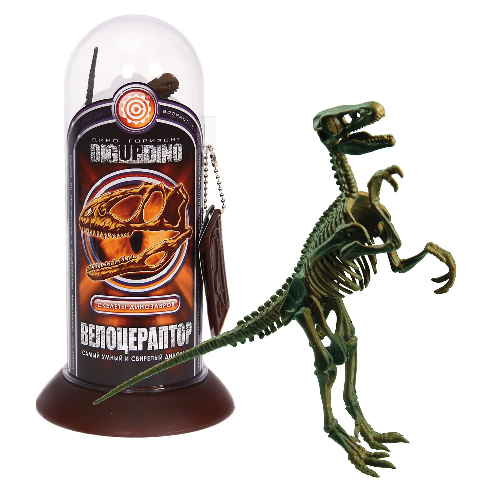 Раскопки: Велоцераптор (Скелет динозавра-быстрого охотника)Профессор Эйн - это серия увлекательных наборов для проведения различных опытов и экспериментов  в домашних условиях. <br><br>С помощью набора Раскопки: Велоцераптор (Скелет динозавра-быстрого охотника) вместе с профессором Эйном Вы можете почувствовать себя настоящим археологом.  Загадочный мир динозавров ведь это так интересно и интригующе! <br>  В наборе уменьшенная копия динозавра Велоцераптора — это  хищный двуногий динозавр, существовавший в позднем меловом периоде 83-70 млн. лет назад. <br> <br>Наглядная модель скелета доисторического существа Трицератопса, полностью даст представление о его строении.<br><br>Соберите коллекцию из динозавров и почувствуйте себя настоящим исследователем древности. <br><br>Набор содержит справочник Профессора Эйна из останков динозавров.<br><br>Размеры: 9 х 18 х 9 см<br><br>Раскопки: Велоцераптор (Скелет динозавра-быстрого охотника)  - можно купить в нашем интернет магазине.<br><br>Ширина мм: 90<br>Глубина мм: 90<br>Высота мм: 175<br>Вес г: 130<br>Возраст от месяцев: 60<br>Возраст до месяцев: 144<br>Пол: Мужской<br>Возраст: Детский<br>SKU: 3344330
