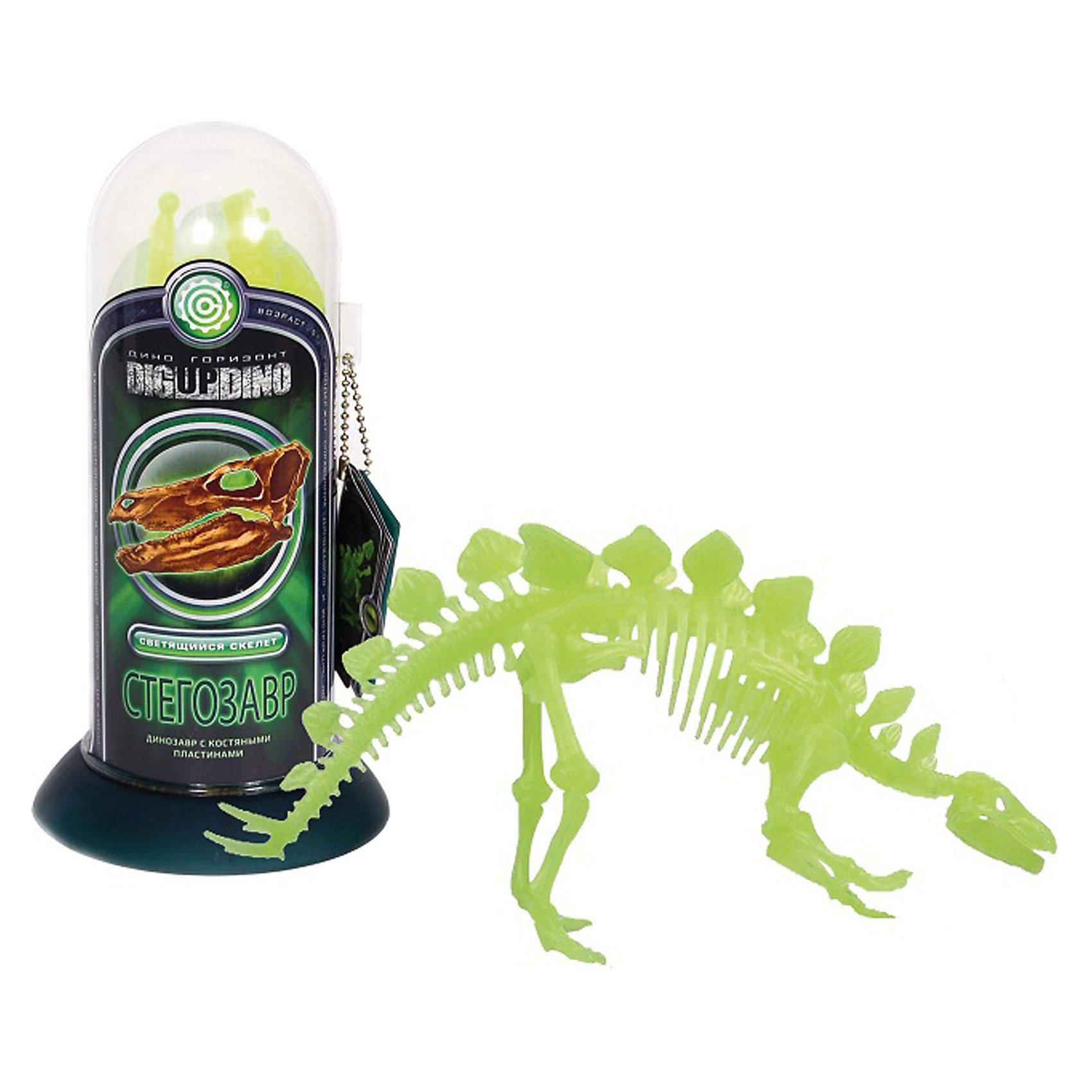 Раскопки: Стегозавр (Светящийся скелет - самого крупного чешуйчатого динозавра)Динозавры и драконы<br>Профессор Эйн - это серия увлекательных наборов для проведения различных опытов и экспериментов  в домашних условиях. <br><br>С помощью набора Раскопки: Раскопки: Стегозавр (Скелет самого крупного чешуйчатого динозавра) вместе с профессором Эйном Вы можете почувствовать себя настоящим археологом.  Загадочный мир динозавров ведь это так интересно и интригующе! <br>  В наборе уменьшенная копия динозавра  Стегозавр  от лат. Stegosaurus — «крышеящер» — род позднеюрских травоядных динозавров, существовавший 155—145 млн лет назад<br> <br>Наглядная модель скелета доисторического существа Стегозавра, полностью даст представление о его строении. Скелет светится в темноте.<br><br>Соберите коллекцию из динозавров и почувствуйте себя настоящим исследователем древности. <br><br>Набор содержит справочник Профессора Эйна из останков динозавров.<br><br>Размеры: 9 х 18 х 9 см<br><br>Раскопки: Стегозавр (Скелет самого крупного чешуйчатого динозавра)  - можно купить в нашем интернет магазине.<br><br>Ширина мм: 90<br>Глубина мм: 90<br>Высота мм: 175<br>Вес г: 144<br>Возраст от месяцев: 60<br>Возраст до месяцев: 144<br>Пол: Мужской<br>Возраст: Детский<br>SKU: 3344333