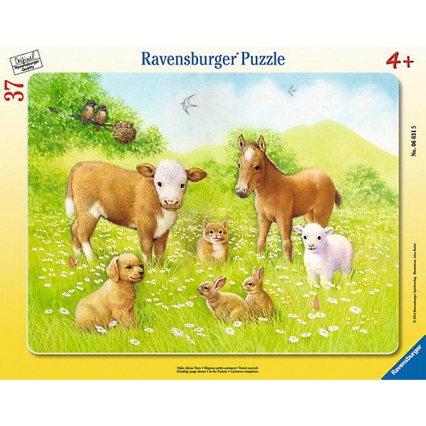Пазл «На лугу», 37 деталей, RavensburgerПазлы для малышей<br>Пазл На лугу к способствует развитию памяти, моторики рук, усидчивости и сообразительности ребёнка. Собирать картинку будет не только интересно, но и познавательно. На ней изображены различные животные и ребёнок запомнит название каждого. Воссоздать изображение будет легко, ведь все детали изготовлены из прочного материала, который не будет расклеиваться при использовании. Также изделие безопасно для ребёнка, так как изготовлено из экологического сырья. Собранная картинка не будет тускнеть и сможет радовать вашего ребёнка еще долгое время.<br><br> В товар входит:<br>-37 деталей<br><br>Дополнительная информация:<br>-Размер картинки – 32,5*24,5 см <br>-Размер упаковки – 38*30 см<br>-Возраст: от 3 лет<br>-Для мальчиков и девочек<br>-Состав: картон, бумага<br>-Бренд: Ravensburger (Равенсбургер)<br>-Страна обладатель бренда: Германия<br><br>Ширина мм: 377<br>Глубина мм: 294<br>Высота мм: 8<br>Вес г: 306<br>Возраст от месяцев: 48<br>Возраст до месяцев: 72<br>Пол: Женский<br>Возраст: Детский<br>Количество деталей: 37<br>SKU: 3412895