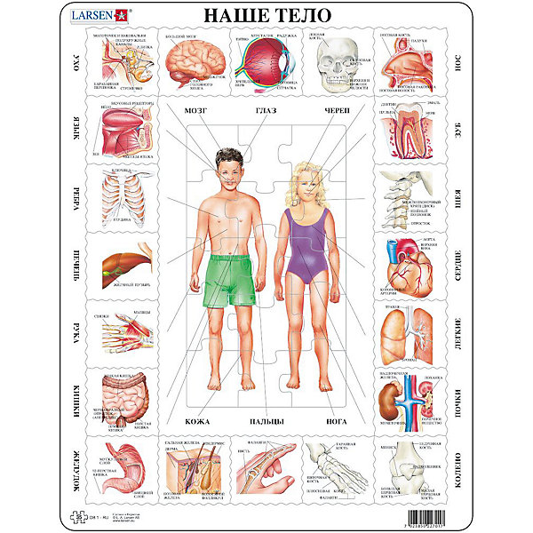 Пазл Наше тело,  Larsen, 35 деталейПазлы для малышей<br>Пазл «Наше тело», Larsen (Ларсен), 35 деталей – развивающий пазл, который в игровой форме познакомит ребенка с анатомией человека.<br><br>В центре пазла изображены фигуры мальчика и девочки, которые необходимо собрать. А по бокам пазла подписаны названия различных органов человека- сердце, почки, желудок, язык и т.д. К ним нужно подобрать соответствующие картинки. Пазл выполнен из высококачественного трехслойного картона, снабжен специальной подложкой, благодаря которой пазл легко собирать. Различные размеры и формы элементов способствуют развитию мелкой моторики ребенка.<br><br>Дополнительная информация:<br><br>- количество деталей: 35 шт.<br>- размер: 36,5х28,5 см<br>- вес: 300 г<br>- материал: плотный картон<br><br>Пазл «Наше тело», Larsen (Ларсен), 35 деталей – увлекательная и познавательная игра, с которой ребенок узнает много интересного о человеческом теле.<br><br>Пазл «Наше тело», Larsen (Ларсен), 35 деталей можно купить в нашем магазине.<br>Ширина мм: 360; Глубина мм: 360; Высота мм: 280; Вес г: 100; Возраст от месяцев: 36; Возраст до месяцев: 60; Пол: Унисекс; Возраст: Детский; Количество деталей: 35; SKU: 3610576;