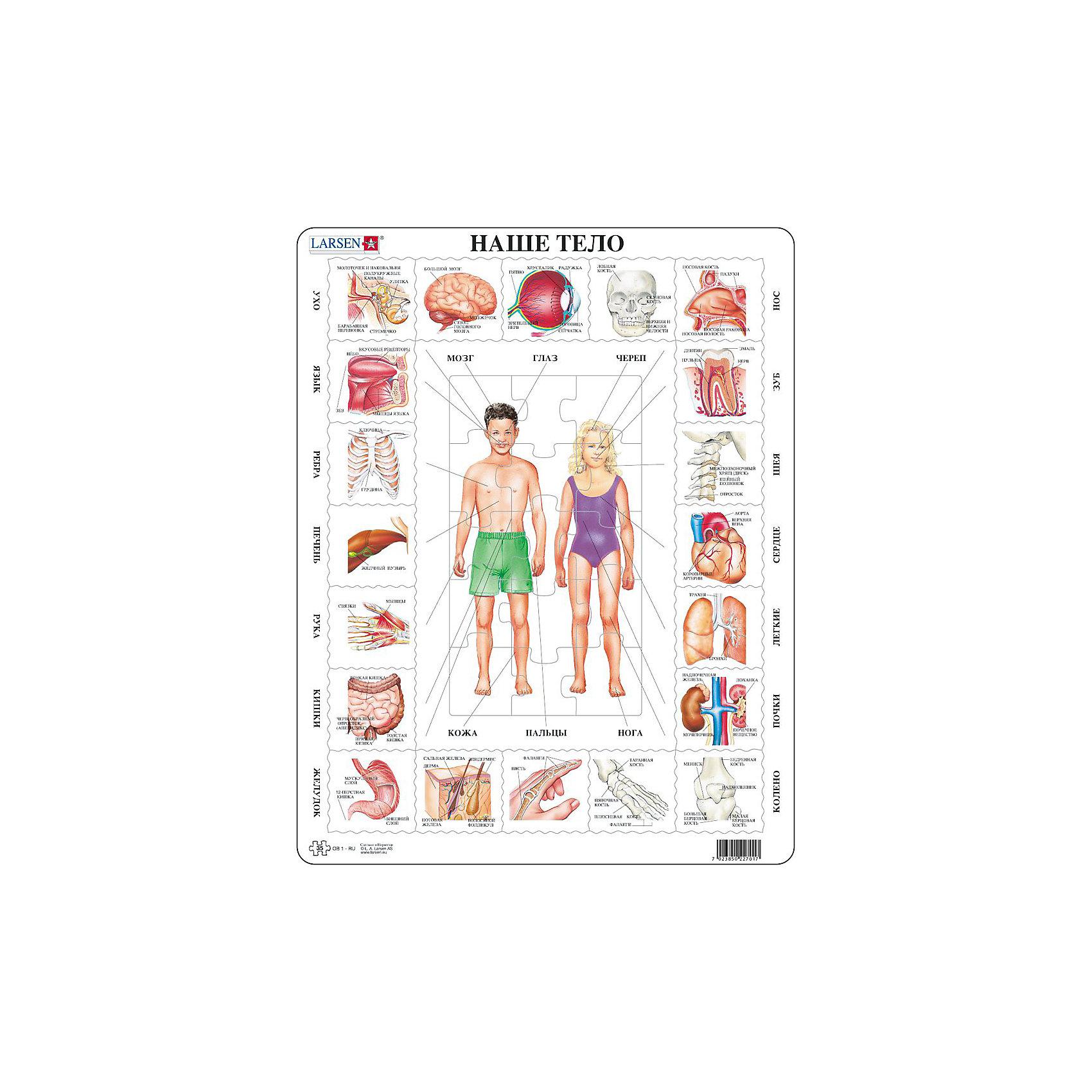 Пазл Наше тело,  Larsen, 35 деталейПазлы для малышей<br>Пазл «Наше тело», Larsen (Ларсен), 35 деталей – развивающий пазл, который в игровой форме познакомит ребенка с анатомией человека.<br><br>В центре пазла изображены фигуры мальчика и девочки, которые необходимо собрать. А по бокам пазла подписаны названия различных органов человека- сердце, почки, желудок, язык и т.д. К ним нужно подобрать соответствующие картинки. Пазл выполнен из высококачественного трехслойного картона, снабжен специальной подложкой, благодаря которой пазл легко собирать. Различные размеры и формы элементов способствуют развитию мелкой моторики ребенка.<br><br>Дополнительная информация:<br><br>- количество деталей: 35 шт.<br>- размер: 36,5х28,5 см<br>- вес: 300 г<br>- материал: плотный картон<br><br>Пазл «Наше тело», Larsen (Ларсен), 35 деталей – увлекательная и познавательная игра, с которой ребенок узнает много интересного о человеческом теле.<br><br>Пазл «Наше тело», Larsen (Ларсен), 35 деталей можно купить в нашем магазине.<br><br>Ширина мм: 360<br>Глубина мм: 360<br>Высота мм: 280<br>Вес г: 100<br>Возраст от месяцев: 36<br>Возраст до месяцев: 60<br>Пол: Унисекс<br>Возраст: Детский<br>Количество деталей: 35<br>SKU: 3610576