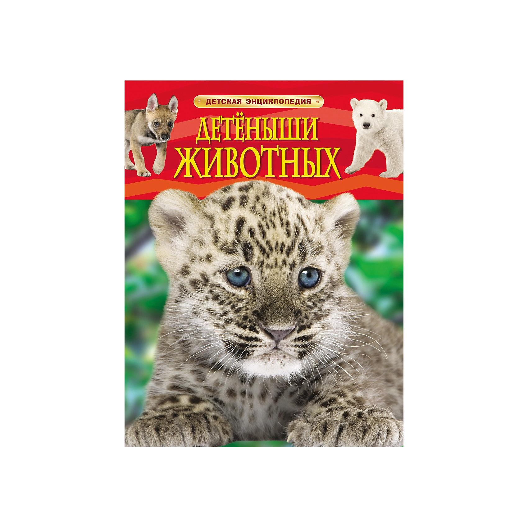 Росмэн Детская энциклопедия Детеныши животных кто мой малыш животные и их детеныши