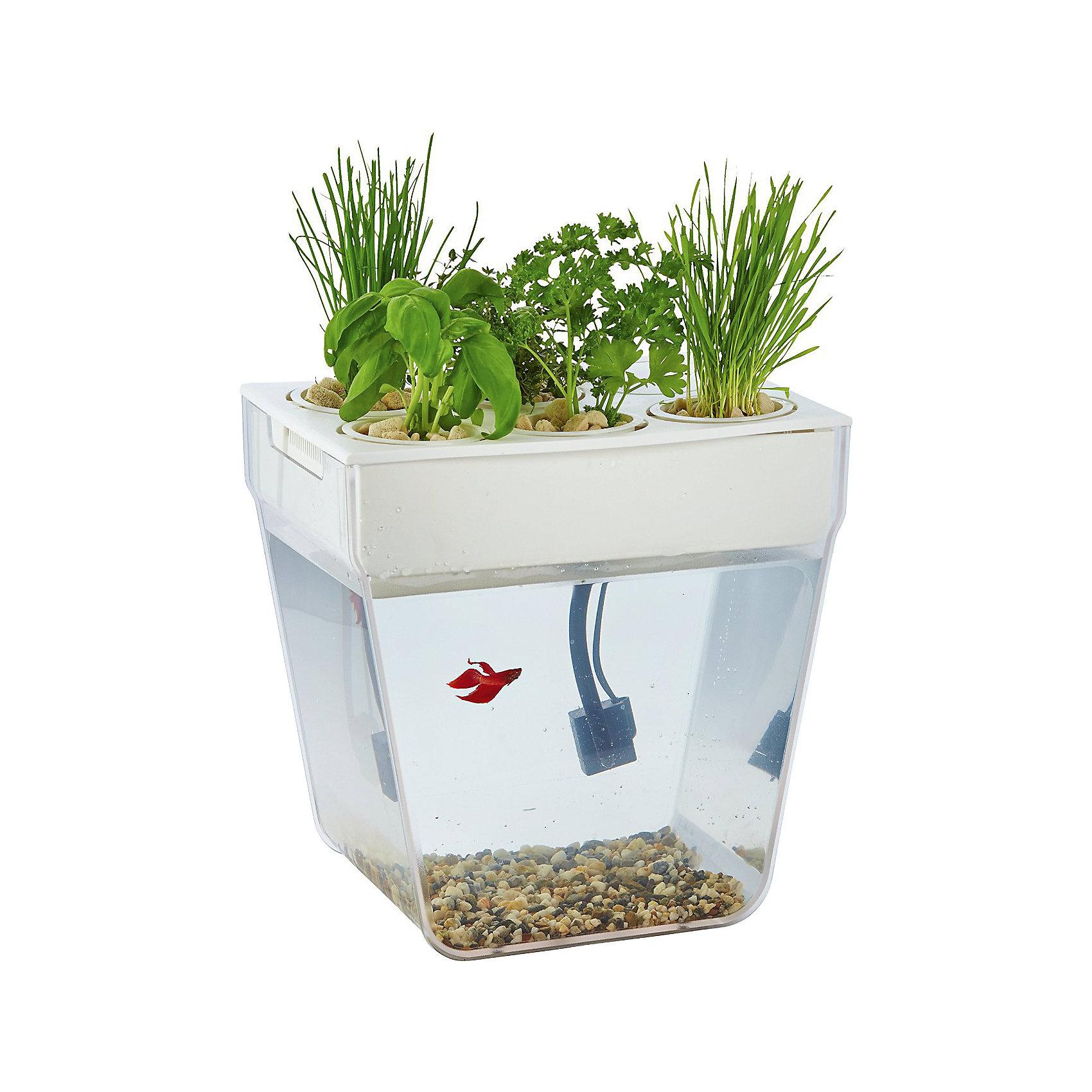 Aquafarm - Акваферма, Назад к истокамВыращивание растений<br>Акваферма – уникальный синтез аквариума и площадки для разведения растений.  Она представляет собой замкнутую экосистему, поддерживающую баланс между растениями и рыбкой. Это самоочищающийся аквариум, который выращивает урожай. Система регулирует сама себя. В набор Аквафермы входит все необходимое для создания полноценной эко-фермы. Просто добавьте рыбку!<br><br>Как «оживить» Акваферму? Просто заполните поддоны субстратом, высадите растения и наполните водой резервуар. Все приготовления займут не более часа. И, наконец, включите Акваферму в розетку, запустите любимую рыбку и не забывайте кормить ее. В остальном система автономна. Естественные отходы вашей рыбки поднимаются потоком воды к горшочкам сверху и питают растения. Очищенная вода поступает обратно к рыбке.<br><br>Дополнительная информация:<br><br>В комплекте: пластиковый аквариум с поддоном для выращивания растений (прозрачная колба, поддон, крышка с отверстиями для горшков и клапаном для кормления рыбки, 5 пластиковых горшков для растений, субстрат для выращивания растений, натуральные камни на дно аквариума, натуральный корм для рыбки, комплект семян растений, вид растений зависит от партии, насос для воды (сертифицирован), силиконовая трубка для насоса, кондиционер для аквариумной воды, инструкция по эксплуатации на русском языке.<br><br>Аква-ферму - самоочищающийся аквариум можно купить в нашем интернет-магазине.<br><br>Ширина мм: 340<br>Глубина мм: 240<br>Высота мм: 340<br>Вес г: 3040<br>Возраст от месяцев: 84<br>Возраст до месяцев: 216<br>Пол: Унисекс<br>Возраст: Детский<br>SKU: 3800320