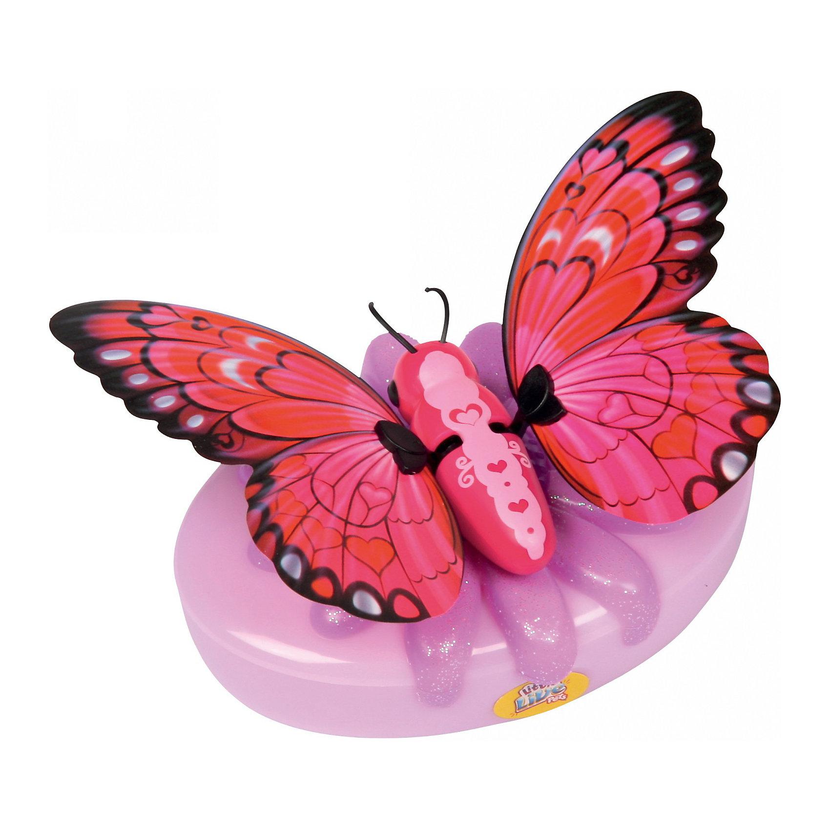 Бабочка Little live Pets Малинница, MooseБабочка Little Live Pets Малинница, Moose - оригинальная необычная игрушка, которая вызовет восторг у Вашей девочки и станет ее любимой питомицей. Чудесные красочные бабочки серии Little Live Pets от известной австралийской компании обладают интерактивными функциями, которые делают их похожими на настоящих живых бабочек. Все бабочки выполнены очень реалистично, каждая имеет свою окраску и индивидуальные особенности.<br><br>Бабочка Малинница с роскошной малиновой окраской и красивыми узорами умеет трепетать и махать крылышками. Посадите ее на руку, и она начнет хлопать крылышками с характерным звуком. Бабочка может сидеть не только на руке, но также на окне или любой другой поверхности с помощью специальной присоски, входящей в комплект.<br>Подзаряжается необычная питомица с помощью специального аккумулятора в виде цветка, у каждой бабочки свой особенный цветок.<br><br>Дополнительная информация:<br><br>- Длина тела бабочки – 4,5 см<br>- Размах крыльев около 11,5 см.<br>- В комплекте: 1 бабочка, 1 зарядное устройство, присоска. <br>- Материал: пластмасса.<br>- Для работы игрушки требуются 2 батарейки типа АА (не входят в комплект).<br>- Размер упаковки: 18 x 5 x 22,1 см.<br>- Вес: 0,17 кг.<br><br>Бабочку Little Live Pets Малинница, Moose можно купить в нашем интернет-магазине.<br><br>Ширина мм: 180<br>Глубина мм: 50<br>Высота мм: 22<br>Вес г: 170<br>Возраст от месяцев: 60<br>Возраст до месяцев: 168<br>Пол: Женский<br>Возраст: Детский<br>SKU: 3808391