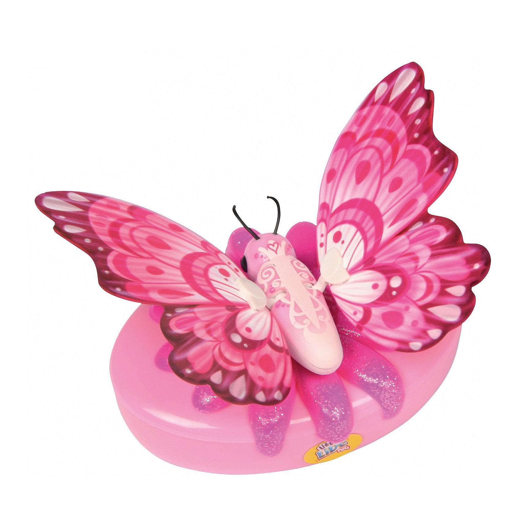 Бабочка Little live Pets Перламутровка, MooseБабочка Little Live Pets Перламутровка, Moose - оригинальная необычная игрушка, которая вызовет восторг у Вашей девочки и станет ее любимой питомицей. Чудесные красочные бабочки серии Little Live Pets от известной австралийской компании обладают интерактивными функциями, которые делают их похожими на настоящих живых бабочек. Все бабочки выполнены очень реалистично, каждая имеет свою окраску и индивидуальные особенности.<br><br>Бабочка Перламутровка с нежной розовой-перламутровой окраской умеет трепетать и махать крылышками. Посадите ее на руку, и она начнет хлопать крылышками с характерным звуком. Бабочка может сидеть не только на руке, но также на окне или любой другой поверхности с помощью специальной присоски, входящей в комплект. Подзаряжается необычная питомица с помощью специального аккумулятора в виде цветка, у каждой бабочки свой особенный цветок.<br><br>Дополнительная информация:<br><br>- Длина тела бабочки – 4,5 см<br>- Размах крыльев около 11,5 см.<br>- В комплекте: 1 бабочка, 1 зарядное устройство, присоска. <br>- Материал: пластмасса.<br>- Для работы игрушки требуются 2 батарейки типа АА (не входят в комплект).<br>- Размер упаковки: 18 x 5 x 22,1 см.<br>- Вес: 0,17 кг.<br><br>Бабочку Little Live Pets Перламутровка, Moose можно купить в нашем интернет-магазине.<br><br>Ширина мм: 180<br>Глубина мм: 50<br>Высота мм: 22<br>Вес г: 170<br>Возраст от месяцев: 60<br>Возраст до месяцев: 168<br>Пол: Женский<br>Возраст: Детский<br>SKU: 3808393
