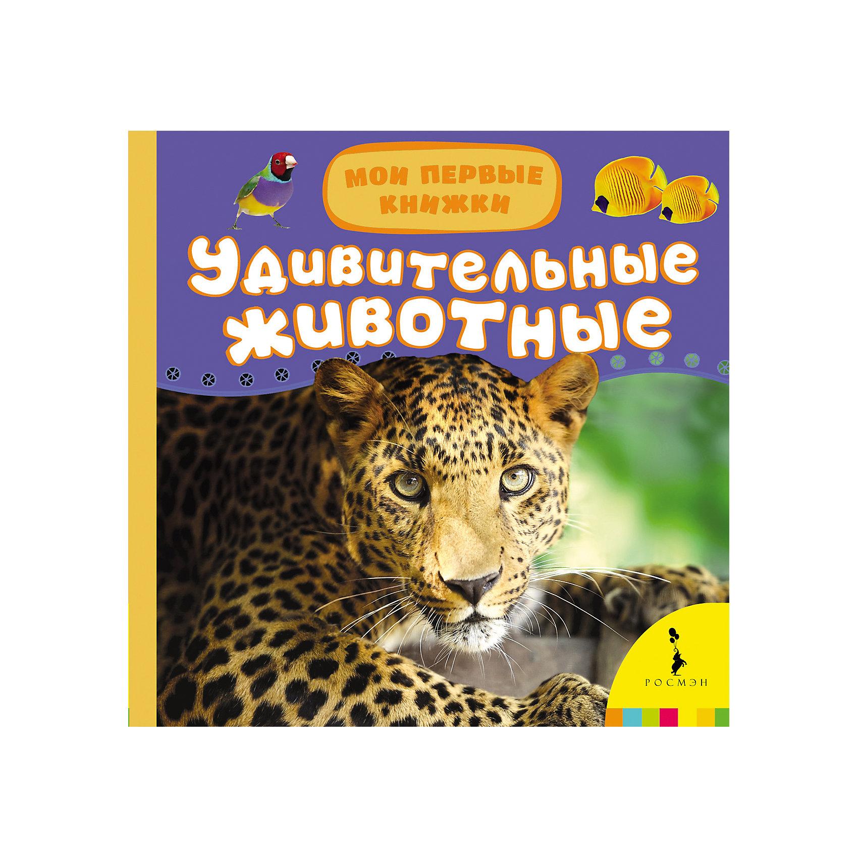 Мои первые книжки Удивительные животныеЭнциклопедии для малышей<br>Характеристики товара:<br><br>- цвет: разноцветный;<br>- материал: картон;<br>- страниц: 14;<br>- формат: 17 х 17 см;<br>- обложка: пухлая;<br>- цветные иллюстрации. <br><br>Издания серии Мои первые книжки - хороший способ занять ребенка! Эта красочная книга станет отличным подарком для родителей и малыша. Она содержит в себе рассказ о животных, которых так любят дети. Плюс - яркие фотографии. Отличный способ привить малышу любовь к чтению! Удобный формат и плотные странички позволят брать книгу с собой в поездки.<br>Чтение и рассматривание картинок даже в юном возрасте помогает ребенку развивать память, концентрацию внимания и воображение. Издание произведено из качественных материалов, которые безопасны даже для самых маленьких.<br><br>Издание Удивительные животные, Мои первые книжки от компании Росмэн можно купить в нашем интернет-магазине.<br><br>Ширина мм: 165<br>Глубина мм: 165<br>Высота мм: 19<br>Вес г: 325<br>Возраст от месяцев: 0<br>Возраст до месяцев: 36<br>Пол: Унисекс<br>Возраст: Детский<br>SKU: 3895270