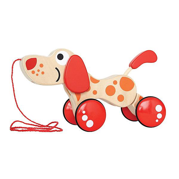 Деревянная каталка Щенок, HapeКаталки и качалки<br>Веселая игрушка Щенок обязательно понравится вашему малышу. Щенок виляет хвостиком, поднимает и опускает голову и ушки. Игрушка побуждает малыша придумывать различные игры. А значит, развивает творческое мышление и воображение. Бегая со щенком, малыш будет развивать  равновесие и координацию. Игрушка выполнена из натурального дерева, покрашена нетоксичной, безопасной краской, все детали - гладкие, прекрасно проработаны, не имеют острых углов. <br><br>Дополнительная информация:<br><br>- Материал: дерево<br>- Размер: 24 х 8,5 х 16 см<br><br>Деревянную каталку Щенок, Hape (Хапе) можно купить с нашем магазине.<br><br>Ширина мм: 257<br>Глубина мм: 150<br>Высота мм: 180<br>Вес г: 390<br>Возраст от месяцев: 12<br>Возраст до месяцев: 36<br>Пол: Унисекс<br>Возраст: Детский<br>SKU: 3896886