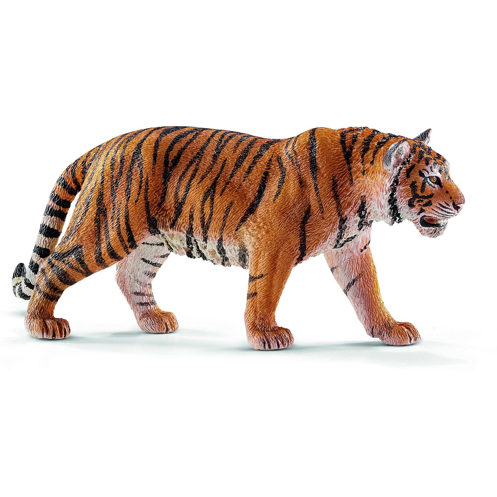 Тигр, SchleichТигр, Schleich (Шляйх) – это высококачественная коллекционная и игровая фигурка.<br>Фигурка Тигра прекрасно разнообразит игру вашего ребенка и станет отличным пополнением коллекции его фигурок животных. Тигр является крупнейшей и самой тяжёлой из диких кошек. Тигры очень быстрые и при этом незаметные хищники, а также великолепные пловцы. Тело у тигра массивное, вытянутое, мускулистое, гибкое. Передняя часть тела развита сильнее, чем задняя. Полосы на теле тигра разнообразны и уникальны. Основной функцией полос является маскировка хищника при охоте. Фигурка тигра выполнена в оранжевом цвете с черными полосками. Тигр стоит на четырех лапах, рот его приоткрыт. <br>Прекрасно выполненные фигурки Schleich (Шляйх) являются максимально точной копией настоящих животных и отличаются высочайшим качеством игрушек ручной работы. Каждая фигурка разработана с учетом исследований в области педагогики и производится как настоящее произведение для маленьких детских ручек. Все фигурки Schleich (Шляйх) сделаны из гипоаллергенных высокотехнологичных материалов, раскрашены вручную и не вызывают аллергии у ребенка.<br><br>Дополнительная информация:<br><br>- Размер фигурки: 5,4 x 13 x 2,7 см.<br>- Материал: высококачественный каучуковый пластик<br><br>Фигурку Тигра, Schleich (Шляйх) можно купить в нашем интернет-магазине.<br><br>Ширина мм: 130<br>Глубина мм: 63<br>Высота мм: 30<br>Вес г: 79<br>Возраст от месяцев: 36<br>Возраст до месяцев: 96<br>Пол: Унисекс<br>Возраст: Детский<br>SKU: 3902536