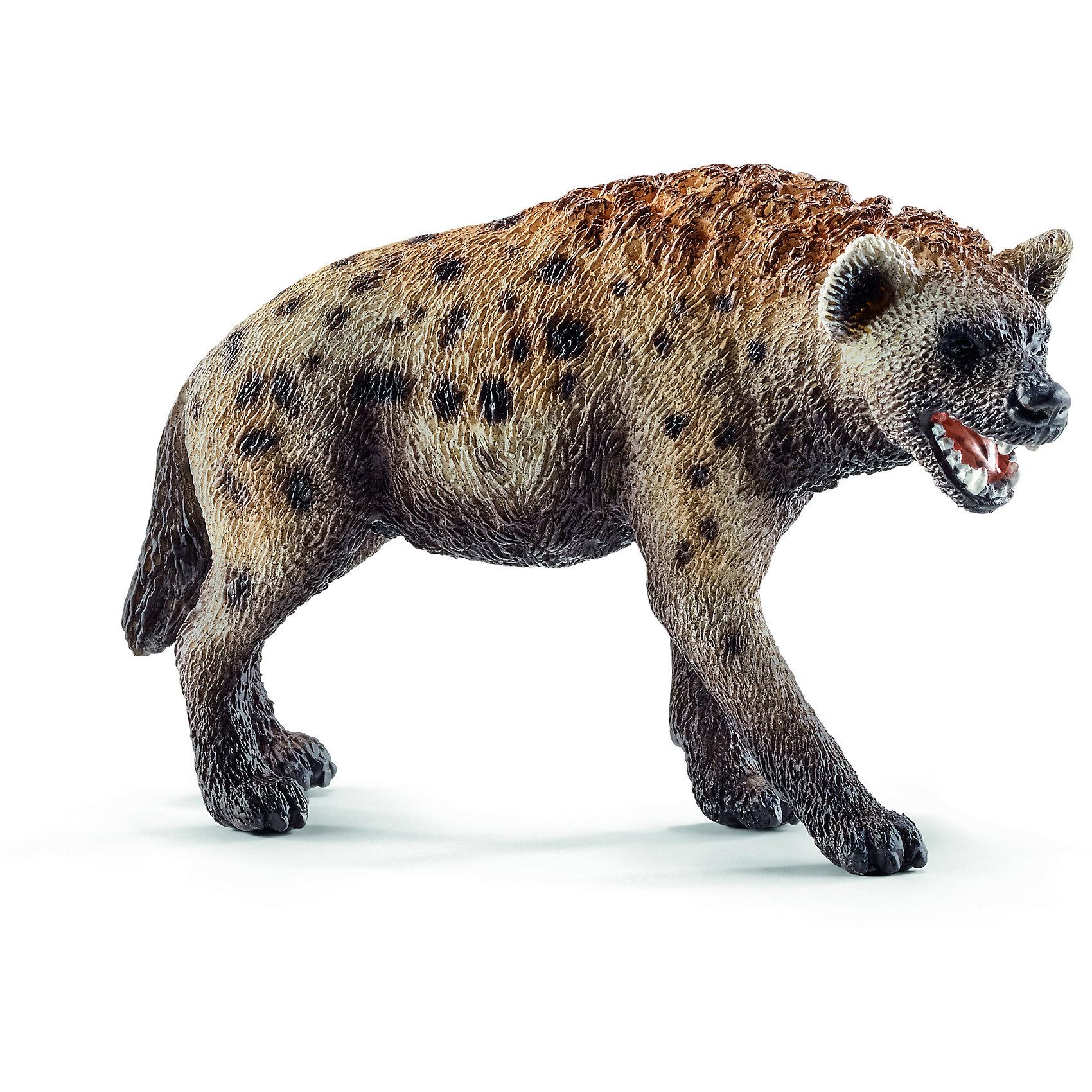 Гиена, SchleichМир животных<br>Гиена, Schleich (Шляйх) – это высококачественная коллекционная и игровая фигурка.<br>Фигурка Гиены прекрасно разнообразит игру вашего ребенка и станет отличным пополнением коллекции его фигурок животных. Пятнистая гиена встречается на большей части Африканского континента. У пятнистой гиены голова напоминает собачью. Морда у нее мощная и широкая. Уши округленные. Хвост лохматый, а длинная грубая шерсть на шее и вдоль спины образует гриву. Гиены имеют чрезвычайно сильные челюсти относительно их размера тела. Спина покатая, задняя часть заметно ниже передней, из-за чего пятнистая гиена передвигается не слишком изящно, но способна развивать скорость до 65 км/час. Конечности четырехпалые, с не втяжными когтями. <br>Прекрасно выполненные фигурки Schleich (Шляйх) являются максимально точной копией настоящих животных и отличаются высочайшим качеством игрушек ручной работы. Каждая фигурка разработана с учетом исследований в области педагогики и производится как настоящее произведение для маленьких детских ручек. Все фигурки Schleich (Шляйх) сделаны из гипоаллергенных высокотехнологичных материалов, раскрашены вручную и не вызывают аллергии у ребенка.<br><br>Дополнительная информация:<br><br>- Размер фигурки: 5,2 х 3,1 х 8,6 см.<br>- Материал: высококачественный каучуковый пластик<br><br>Фигурку Гиены, Schleich (Шляйх) можно купить в нашем интернет-магазине.<br><br>Ширина мм: 92<br>Глубина мм: 55<br>Высота мм: 27<br>Вес г: 37<br>Возраст от месяцев: 36<br>Возраст до месяцев: 96<br>Пол: Унисекс<br>Возраст: Детский<br>SKU: 3902542