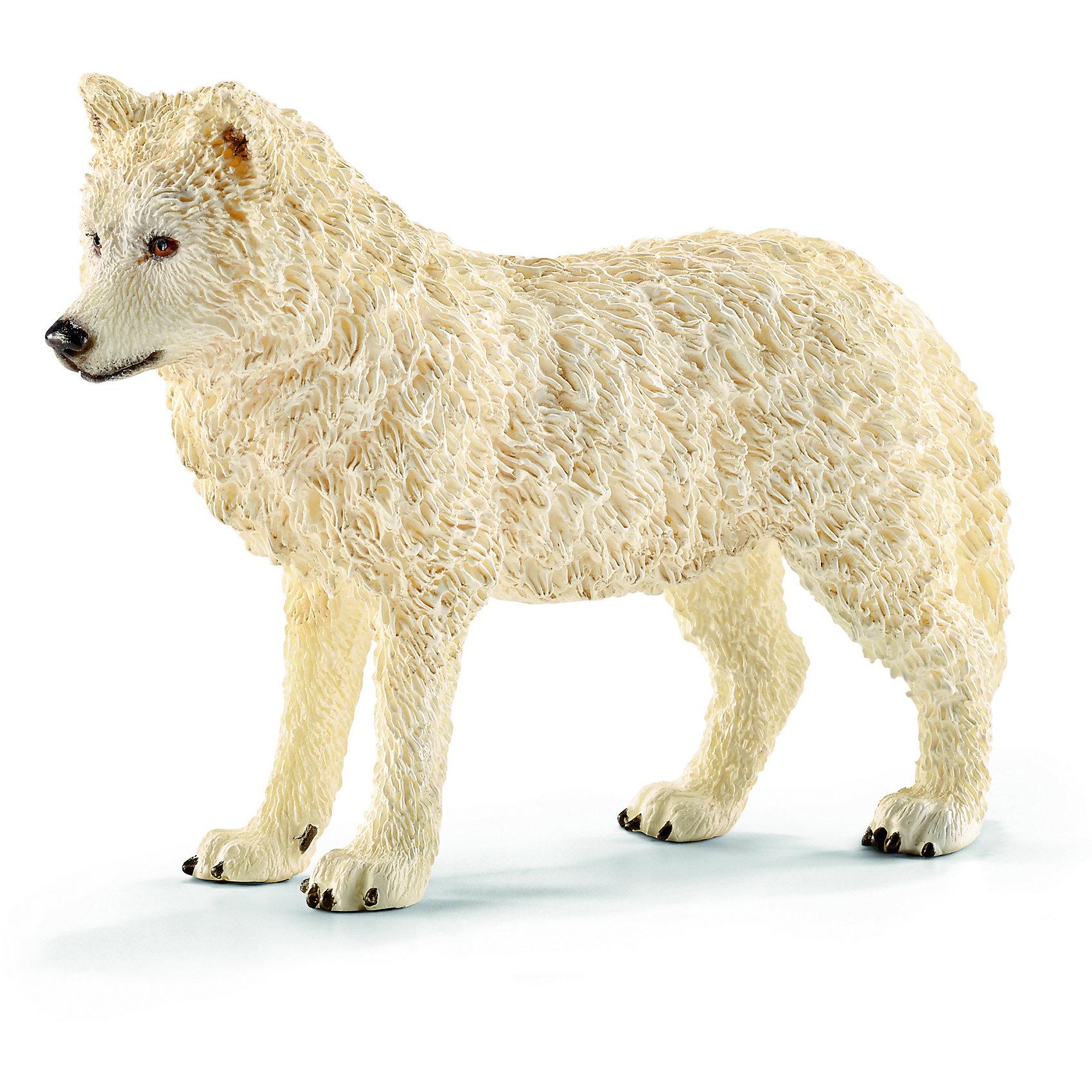Волк, SchleichМир животных<br>Волк, Schleich (Шляйх) – это высококачественная коллекционная и игровая фигурка.<br>Фигурка Волка прекрасно разнообразит игру вашего ребенка и станет отличным пополнением коллекции его фигурок животных. Арктический волк - необычное красивое и уникальное животное. Белоснежный волк обитает в северных широтах. Арктический волк до сих пор обитает на всей территории исторически доступной его виду. Причиной тому является слабая конкуренция с человеком. Он превосходный охотник, однако, в поисках пищи в условиях сильного мороза он вынужден проходить ежедневно до 30 км в день! <br>Прекрасно выполненные фигурки Schleich (Шляйх) являются максимально точной копией настоящих животных и отличаются высочайшим качеством игрушек ручной работы. Каждая фигурка разработана с учетом исследований в области педагогики и производится как настоящее произведение для маленьких детских ручек. Все фигурки Schleich (Шляйх) сделаны из гипоаллергенных высокотехнологичных материалов, раскрашены вручную и не вызывают аллергии у ребенка.<br><br>Дополнительная информация:<br><br>- Размер фигурки: 2,8 х 6,1 х 8,8 см.<br>- Материал: высококачественный каучуковый пластик<br><br>Фигурку Волка, Schleich (Шляйх) можно купить в нашем интернет-магазине.<br><br>Ширина мм: 96<br>Глубина мм: 66<br>Высота мм: 25<br>Вес г: 45<br>Возраст от месяцев: 36<br>Возраст до месяцев: 96<br>Пол: Унисекс<br>Возраст: Детский<br>SKU: 3902549
