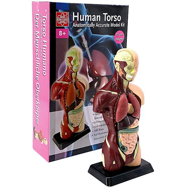 Анатомия человеческого тела, Edu-ToysАнатомия<br>Анатомия человеческого тела, Edu-Toys - реалистичная модель человеческого тела познакомит Вашего ребенка с анатомией и внутренними органами человека. Из входящих в набор деталей нужно предварительно собрать макет согласно инструкции. На готовом макете, точной копии внутреннего строения тела, представлены части тела, кости, внутренние органы. В иллюстрированном руководстве на русском языке указаны медицинские названия органов и частей тела.<br><br>Дополнительная информация:<br><br>- В комплекте: 8 деталей, инструкция.<br>- Материал: пластик.<br>- Высота макета: 28 см.<br>- Размер упаковки: 30 х 20 х 15 см.<br>- Вес: 1,2 кг.<br><br>Анатомию человеческого тела, Edu-Toys, можно купить в нашем интернет-магазине.<br>Ширина мм: 216; Глубина мм: 89; Высота мм: 356; Вес г: 770; Возраст от месяцев: 96; Возраст до месяцев: 144; Пол: Унисекс; Возраст: Детский; SKU: 4013709;