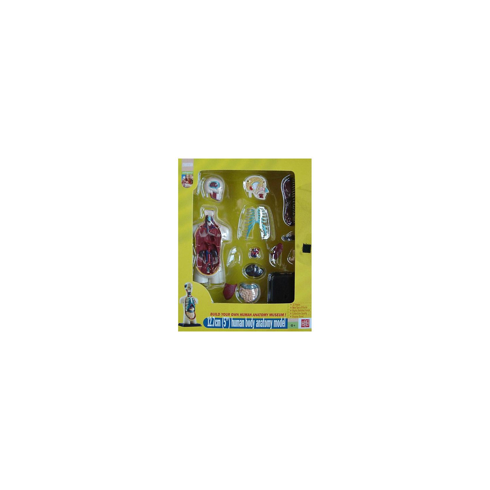 "Анатомический набор ""Торс"", Edu-Toys от myToys"