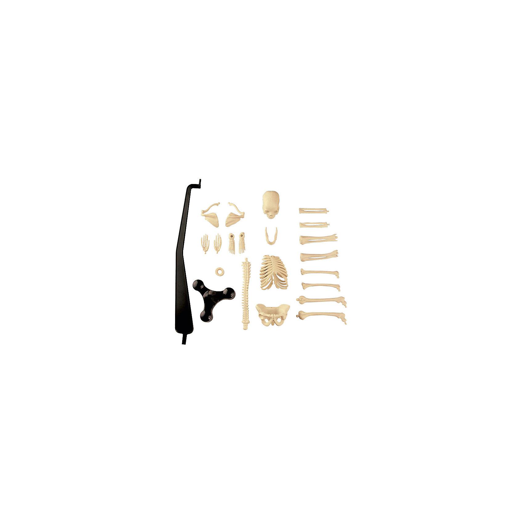 Сборная модель скелета, Edu-Toys от myToys