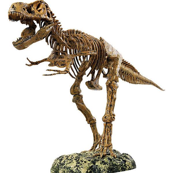 Набор скелет динозавра 91см, Edu-ToysНаборы для раскопок<br>С помощь увлекательного Набора Скелет динозавра, Edu-Toys Вы сможете собрать впечатляющую, высотой 91 см., копию скелета древнего ящера тираннозавра Т-Rex. В комплекте 51 деталь для сборки, в точности воспроизводящая все кости скелета легендарного динозавра. Готовая модель настолько реалистична, что больше напоминает музейный экспонат, чем игрушку. Подробная инструкция поможет легко собрать всю конструкцию, для удобства сборки на каждой детали выгравирован номер. <br><br>Дополнительная информация:<br><br>- В комплекте: 51 деталь, стенд, инструкция по сборке.<br>- Высота модели: 91 см.<br>- Материал: пластик.<br>- Размер упаковки: 61 x 41 x 9 см.<br>- Вес: 2,15 кг.<br><br>Набор скелет динозавра, Edu-Toys, можно купить в нашем интернет-магазине.<br>Ширина мм: 620; Глубина мм: 42; Высота мм: 380; Вес г: 2150; Возраст от месяцев: 96; Возраст до месяцев: 144; Пол: Унисекс; Возраст: Детский; SKU: 4013735;