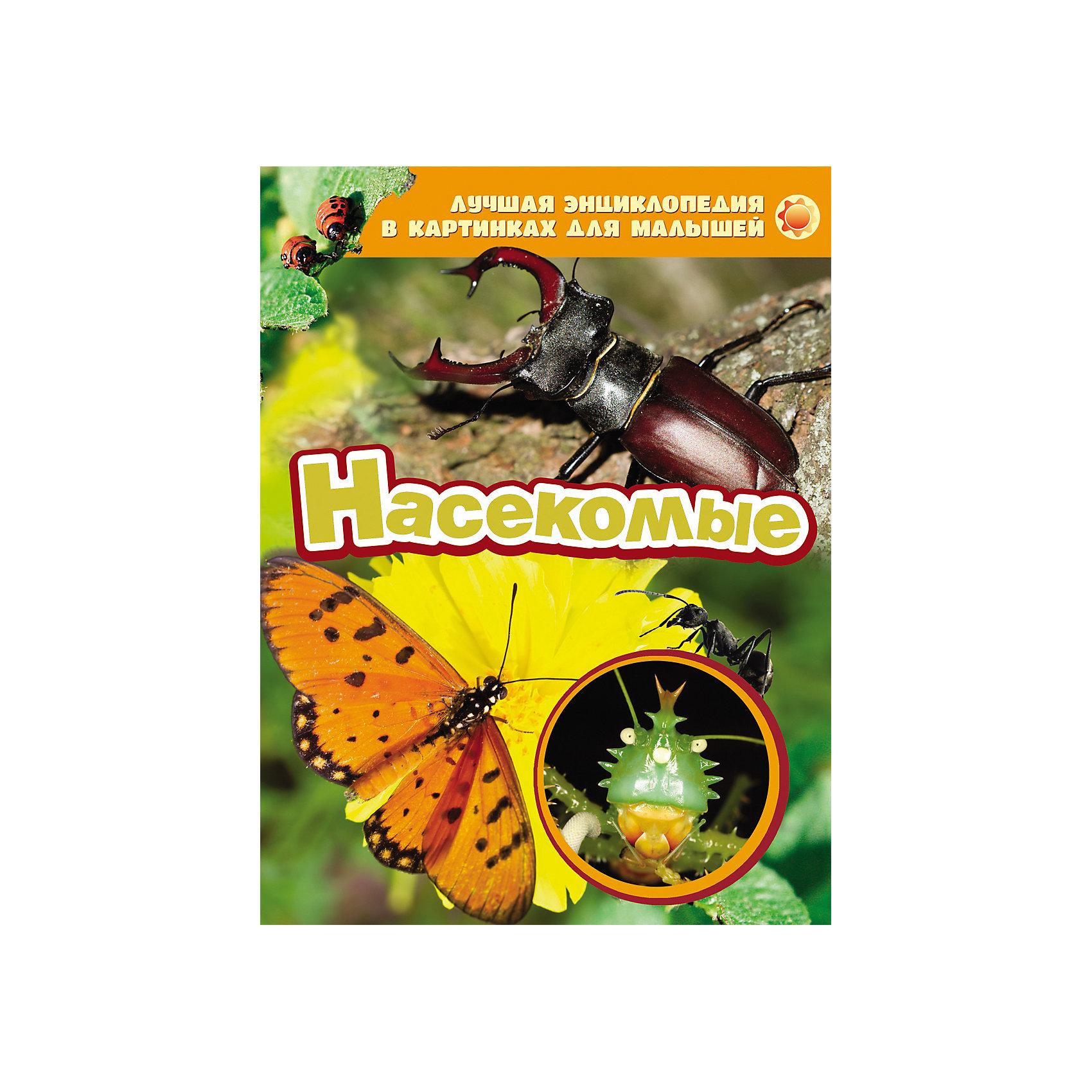 Насекомые, Лучшая энциклопедия в картинках для малышейЭнциклопедия в картинках Насекомые, Росмэн - это замечательная, богато иллюстрированная энциклопедия для самых маленьких, которая познакомит Вашего ребенка с удивительным миром насекомых. Он научится узнавать насекомых по их внешнему виду, узнает интересные подробности и факты о них. Книга оформлена красочными иллюстрациями и фотографиями.<br><br>Дополнительная информация:<br><br>- Серия: Лучшая энциклопедия в картинках для малышей.<br>- Иллюстрации: цветные.<br>- Обложка: твердая.<br>- Объем: 24 стр.<br>- Формат: 26,5 x 20,5 х 0,5 см.<br>- Вес: 0,285 кг.<br><br>Энциклопедию в картинках Насекомые, Росмэн можно купить в нашем интернет-магазине.<br><br>Ширина мм: 265<br>Глубина мм: 205<br>Высота мм: 5<br>Вес г: 285<br>Возраст от месяцев: 36<br>Возраст до месяцев: 84<br>Пол: Унисекс<br>Возраст: Детский<br>SKU: 4046781