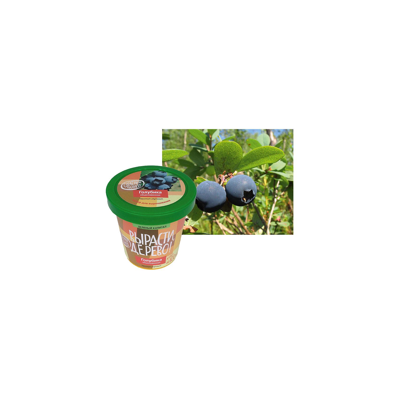 Набор Вырасти, дерево! Голубика обыкновеннаяГолубика обыкновенная - это один из самых полезных и вкусных плодовых кустарников. В отличие от своего ближайшего лесного родственника, черники, голубика обыкновенная неприхотлива и растет в самых разнообразных условиях. Кроме того, во взрослом виде она достигает 1 метра в высоту, а с одного куста можно собрать до 2 килограммов урожая. Северные народы называют голубику нежная, так как у нее очень хрупкая, но вкусная ягода. Вырастите голубику обыкновенную из семян всей семьей, и это занятие Вас, несомненно, объединит, ведь ничто так не сближает, как общий досуг!<br><br>Дополнительная информация:<br><br>- В наборе: пластиковый горшок с крышкой объемом 0,5 литра; крышка в качестве поддона для сбора избыточной влаги; семена Голубики обыкновенной; торфяная таблетка - питание для проросших семян; плодородный грунт (PH=6) (на первые 1-2 года жизни дерева); агроперлит для стратификации семян<br>- Размер упаковки: 10х10х10 см.<br>- Вес упаковки: 350 гр.<br><br>Набор Вырасти, дерево! Голубика обыкновенная - подарите себе возможность стать обладателем полезнейшего кустарника.<br><br>Набор Вырасти, дерево! Голубика обыкновенная можно купить в нашем интернет-магазине.<br><br>Ширина мм: 100<br>Глубина мм: 100<br>Высота мм: 100<br>Вес г: 350<br>Возраст от месяцев: 60<br>Возраст до месяцев: 168<br>Пол: Унисекс<br>Возраст: Детский<br>SKU: 4143809