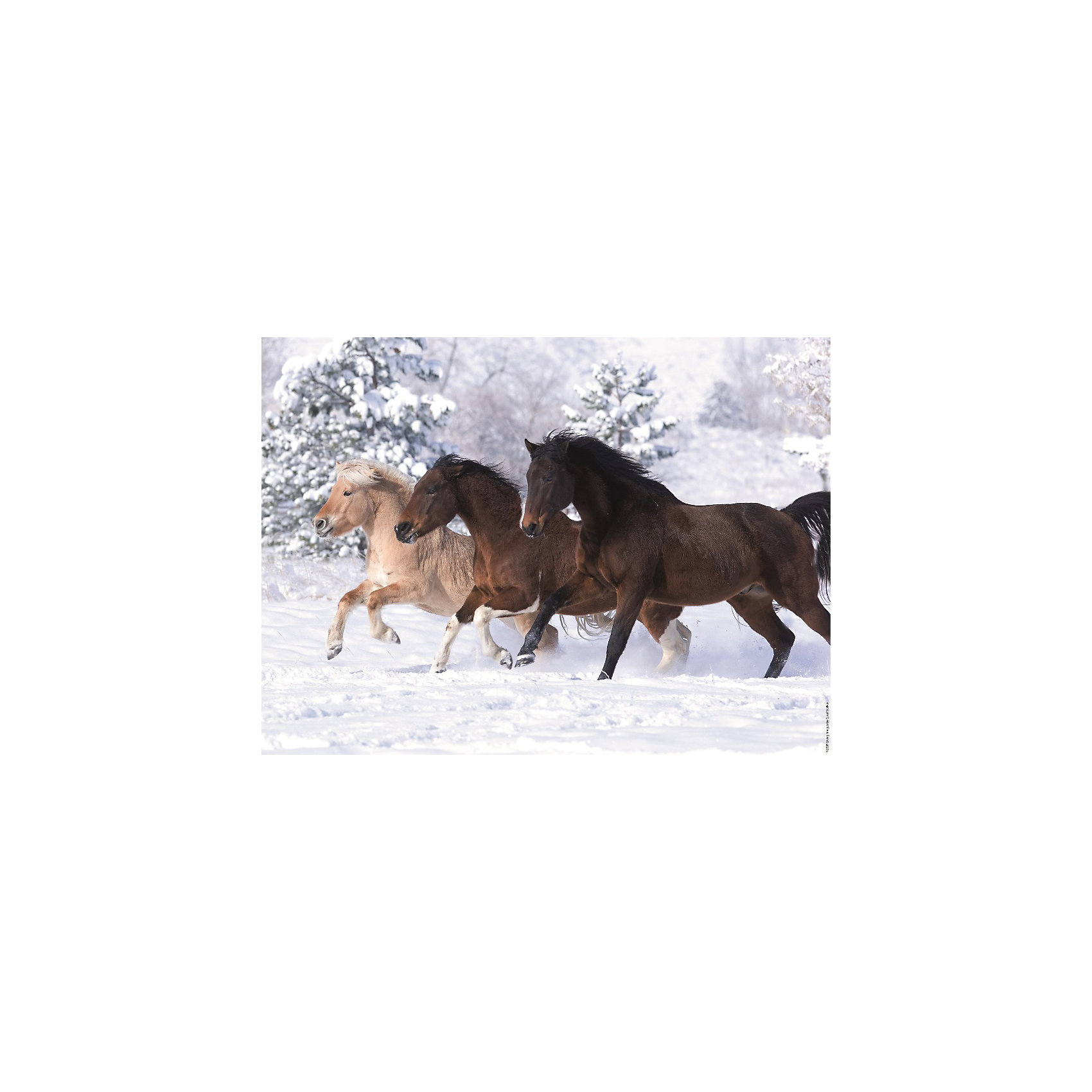 Пазл «Галопом по снегу» 500 деталей, RavensburgerПазл «Галопом по снегу» 500 деталей, Ravensburger (Равенсбургер) – это пазл отличного качества с яркими красками и реалистичной картинкой.<br>Собрав пазл «Галопом по снегу» вы получите замечательный постер с изображением тройки лошадей, скачущих вдоль заснеженного леса. Каждая деталь пазла имеет свою форму и подходит только на свое место. Нет двух одинаковых деталей! Пазл изготовлен из картона высочайшего качества. Softclick технология гарантирует 100% соединение деталей. Детали не деформируются и не расслаиваются при сборке. Матовая поверхность приятна на ощупь и не отбрасывает блики на свету. Все изображения аккуратно отсканированы и напечатаны на ламинированной бумаге. Пазл - великолепная игра для семейного досуга. Сегодня собирание пазлов стало особенно популярным, главным образом, благодаря своей многообразной тематике, способной удовлетворить самый взыскательный вкус. А для детей это не только интересно, но и полезно. Собирание пазла развивает мелкую моторику у ребенка, тренирует наблюдательность, логическое мышление, знакомит с окружающим миром, с цветом и разнообразными формами.<br><br>Дополнительная информация:<br><br>- Количество деталей: 500 шт.<br>- Размер картинки: 49 х 36 см.<br>- Материал: картон<br>- Размер упаковки: 34 х 23 х 4 см.<br>- Вес: 579 гр.<br><br>Пазл «Галопом по снегу» 500 деталей, Ravensburger (Равенсбургер) можно купить в нашем интернет-магазине.<br><br>Ширина мм: 340<br>Глубина мм: 230<br>Высота мм: 40<br>Вес г: 579<br>Возраст от месяцев: 96<br>Возраст до месяцев: 192<br>Пол: Унисекс<br>Возраст: Детский<br>Количество деталей: 500<br>SKU: 4214574