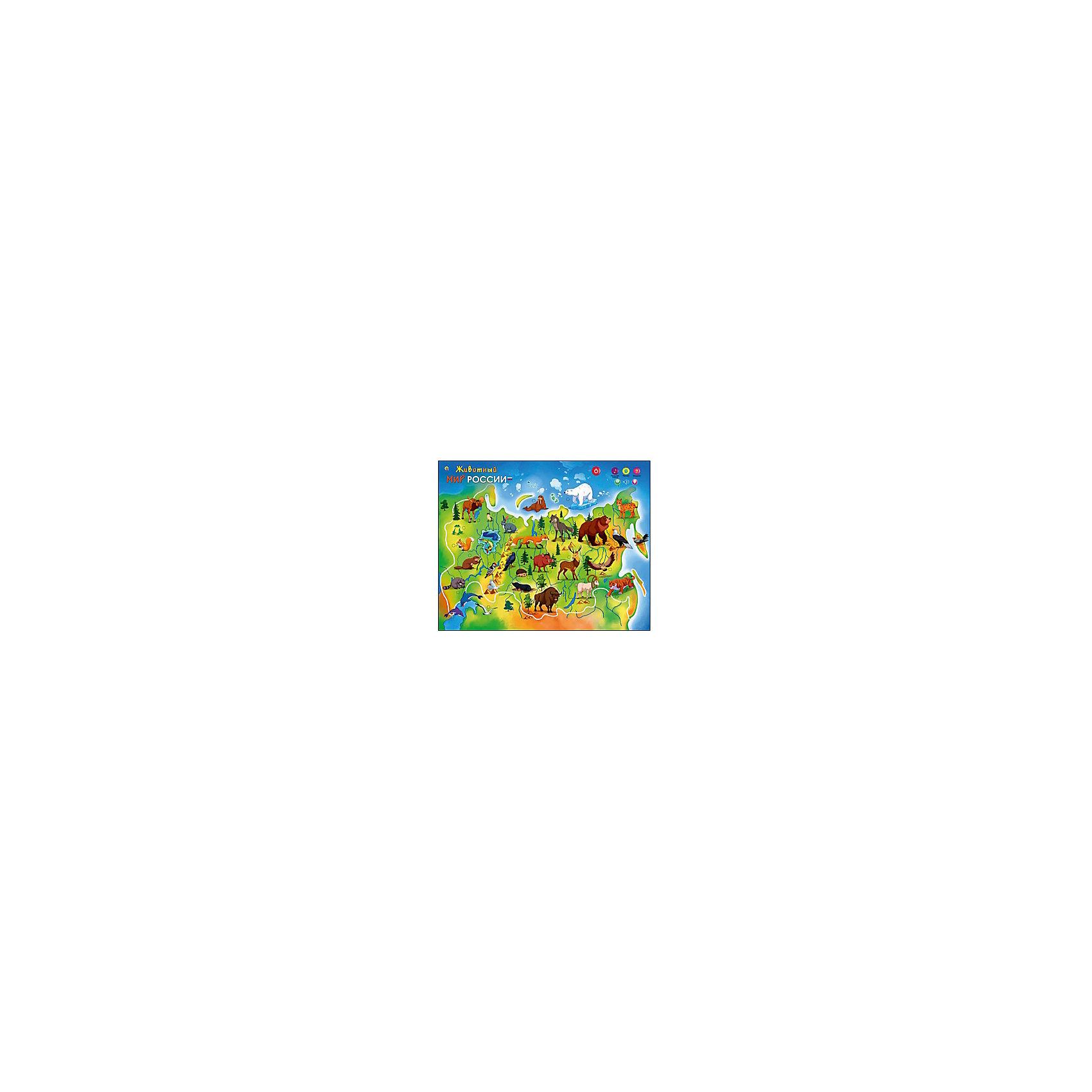 Звуковой плакат Животный мир РоссииОбучающие плакаты и планшеты<br>Звуковой плакат Животный мир России – это эффективное пособие для обучения вашего малыша!<br>Развивающий звуковой плакат Животный мир России предназначен для обучения детей старше 3 лет. Он познакомит малышей с дикими животными, обитающими на просторах нашей страны. На плакате изображены яркие картинки. При нажатии на сенсорную кнопку ребенок услышит название каждого животного, небольшой рассказ о нем и звуки, которые оно издает. Для закрепления знаний предусмотрен режим Вопросы. Плакат можно расположить на любой ровной поверхности. Звук регулируется. Специальное покрытие защитит изделие от влаги. Занятия со звуковым плакатом развивают у детей кругозор, внимательность, память, логическое и образное мышление, правильную речь, воображение.<br><br>Дополнительная информация:<br><br>- Материал: пластмасса, полимерная плёнка<br>- Размер плаката: 47,5 х 59 см.<br>- Батарейки: 3 батарейки ААА (входят в комплект)<br>- Размер упаковки: 60 х 4 х 18 см.<br><br>Звуковой плакат Животный мир России можно купить в нашем интернет-магазине.<br><br>Ширина мм: 600<br>Глубина мм: 40<br>Высота мм: 180<br>Вес г: 400<br>Возраст от месяцев: 36<br>Возраст до месяцев: 60<br>Пол: Унисекс<br>Возраст: Детский<br>SKU: 4214642
