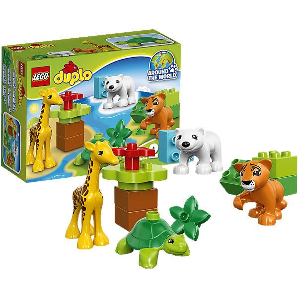 LEGO DUPLO 10801: Вокруг света: малышиКонструкторы для малышей<br>LEGO DUPLO (ЛЕГО Дупло) 10801: Вокруг света: малыши идеально подходит маленьким любителям животных. Ваш ребенок познакомится с детенышами животных со всех концов света, узнает как они называются, как выглядят и где живут в дикой природе. В наборе Вы найдете тигрёнка из тропических лесов, детёныша жирафа из африканской саванны, полярного медвежонка и детёныша черепахи. Среди деталей имеются также блоки для строительства рельефа.<br><br>ЛЕГО Дупло - серия конструкторов для малышей, которую отличает крупные яркие детали со скругленными безопасными углами и многообразие игровых сюжетов, это и животные, и растения, и машинки, и сказочные персонажи. <br><br>Дополнительная информация:<br><br>- Игра с конструктором LEGO (ЛЕГО) развивает мелкую моторику ребенка, фантазию и воображение, учит его усидчивости и внимательности.<br>- Количество деталей: 13.<br>- Количество минифигур: 4 (тигренок, медвежонок, детеныш жирафа, детеныш черепахи).<br>- Серия: LEGO DUPLO (ЛЕГО Дупло). <br>- Материал: пластик.<br>- Размер упаковки: 19 х 7 х 14 см.<br>- Вес: 0,17 кг.<br><br>Конструктор LEGO DUPLO (ЛЕГО Дупло) 10801: Вокруг света: малыши можно купить в нашем интернет-магазине.<br>Ширина мм: 194; Глубина мм: 139; Высота мм: 73; Вес г: 172; Возраст от месяцев: 24; Возраст до месяцев: 60; Пол: Унисекс; Возраст: Детский; SKU: 4259169;