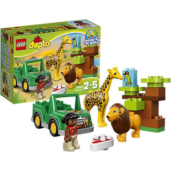 LEGO DUPLO 10802: Вокруг света: АфрикаLEGO<br>LEGO DUPLO (ЛЕГО Дупло) 10802: Вокруг света: Африка непременно заинтересует любознательных малышей. Вашему ребенку предстоит отправиться в увлекательное путешествие в жаркую Африку и познакомиться с местными обитателями - забавным жирафом и добродушным львом. Симпатичная смотрительница заповедника внимательно следит за здоровьем своих питомцев и каждый день отправляется на джипе проведать их. Сборное дерево с блоком-птичкой развивают основные навыки конструирования и создает ландшафт для веселых игр и приключений.<br><br>ЛЕГО Дупло - серия конструкторов для малышей, которую отличают крупные яркие детали со скругленными безопасными углами и многообразие игровых сюжетов, это и животные, и растения, и машинки, и сказочные персонажи. <br><br>Дополнительная информация:<br><br>- Игра с конструктором LEGO (ЛЕГО) развивает мелкую моторику ребенка, фантазию и воображение, учит его усидчивости и внимательности.<br>- Количество деталей: 18.<br>- Количество минифигур: 3 (смотрительница, лев, жираф).<br>- Серия: LEGO DUPLO (ЛЕГО Дупло). <br>- Материал: пластик.<br>- Размер упаковки: 26 х 9 х 19 см.<br>- Вес: 0,48 кг.<br><br>Конструктор LEGO DUPLO (ЛЕГО Дупло) 10802: Вокруг света: Африка можно купить в нашем интернет-магазине.<br><br>Ширина мм: 263<br>Глубина мм: 190<br>Высота мм: 91<br>Вес г: 472<br>Возраст от месяцев: 24<br>Возраст до месяцев: 60<br>Пол: Унисекс<br>Возраст: Детский<br>SKU: 4259170