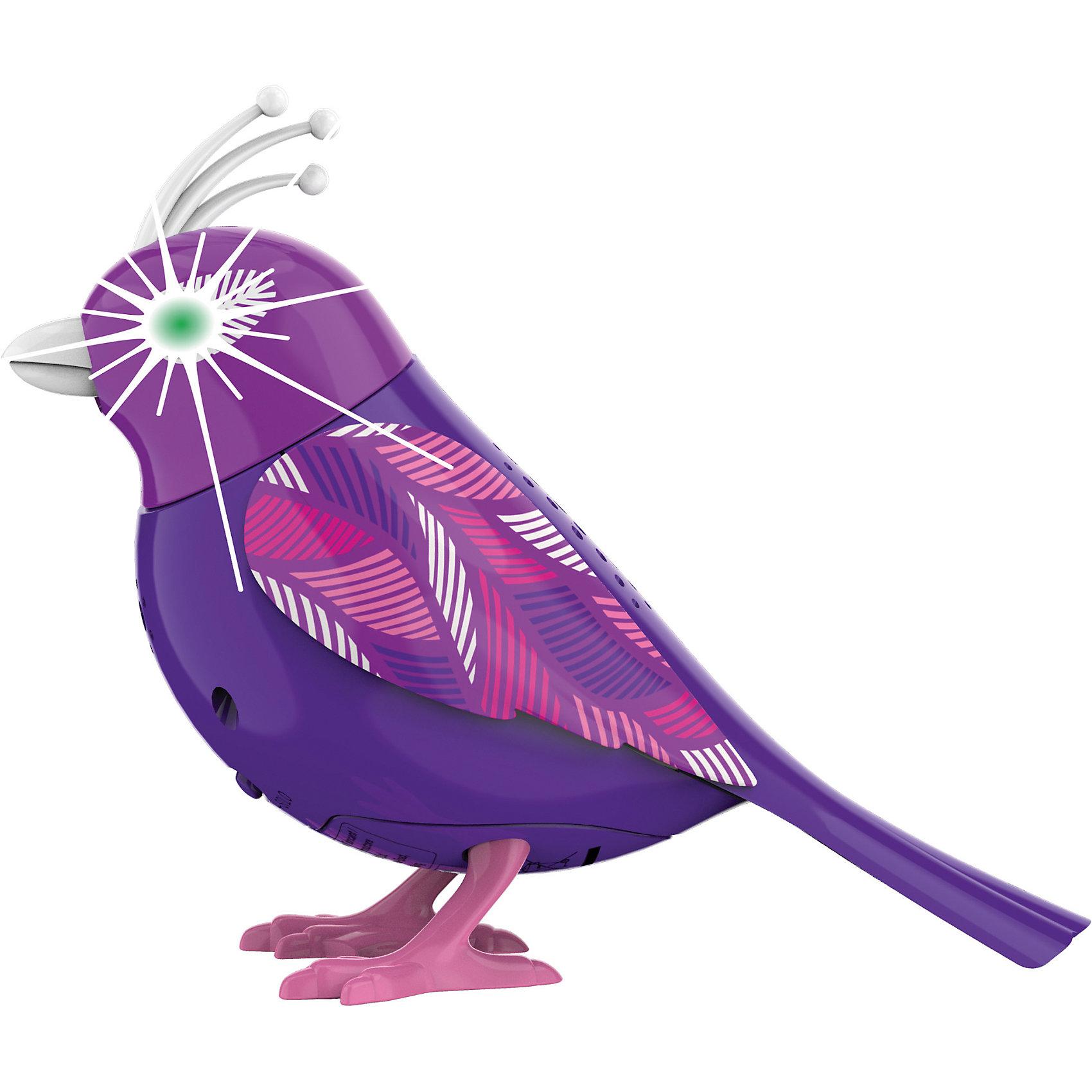 Птичка с мерцающими глазами, в ассортименте, DigiBirdsПтичка с мерцающими глазами, DigiBirds – это забавная интерактивная птичка, которая реагирует на свист, дуновение и звук.<br>Птичка с мерцающими глазами прекрасное дополнением коллекции DigiFriends. Глаза птички мерцают и светятся в такт мелодии. Птичка знает более 55 вариантов мелодий и птичьего щебета. Для активизации птички необходимо подуть на ее клюв. Чтобы птичка защебетала, можно также посвистеть в кольцо-свисток. Ребенок может надеть кольцо-свисток на два пальца, закрепить там птичку и свободно играть или даже бегать. Птичка совместима с другими птичками из серии Digibirds (ДигиБердс). В каждую птицу встроен сенсорный датчик, позволяющий им «слышать» своих сородичей. Первая включенная птичка будет солистом – остальные будут вторить ее щебету.<br><br>Дополнительная информация:<br><br>- В наборе: птица, кольцо-свисток<br>- Цвет в ассортименте<br>- Материал: пластик<br>- Батарейки: 3 типа LR44 (входят в комплект)<br>- Размер упаковки: 6,4х15,2х10,2 см.<br>- Вес: 91 гр.<br>- ВНИМАНИЕ! Данный артикул представлен в разных вариантах исполнения. К сожалению, заранее выбрать определенный вариант невозможно. При заказе нескольких наборов возможно получение одинаковых<br><br>Птичку с мерцающими глазами, DigiBirds (ДигиБердс) можно купить в нашем интернет-магазине.<br><br>Ширина мм: 64<br>Глубина мм: 152<br>Высота мм: 102<br>Вес г: 91<br>Возраст от месяцев: 36<br>Возраст до месяцев: 84<br>Пол: Унисекс<br>Возраст: Детский<br>SKU: 4380237