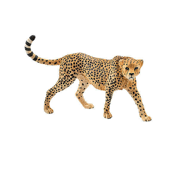 Коллекционная фигурка Schleich Дикие животные Гепард, самкаМир животных<br>Характеристики:<br><br>• возраст: от 3 лет;<br>• материал: каучуковый пластик;<br>• размер игрушки: 9,8х3,4х6,5 см;<br>• вес упаковки: 35 гр.;<br>• размер упаковки: 9,8х3,4х6,5 см;<br>• страна бренда: Германия.<br><br>Фигурка от бренда Schleich – детализированная копия самки гепарда. Фигурка с точностью передает особенности строения тела животного, внешний вид шерсти, характерную позу.<br><br>В изготовлении каждой фигурки «Шляйх» учитываются рекомендации педагогики для того, чтобы игрушка была интересна и полезна ребенку, комфортно располагалась в руках. Фигурка раскрашена вручную, сделана из прочных безопасных материалов, не вызывающих аллергию. Разработано при участии Берлинского зоопарка.<br><br>Фигурка подойдет для сюжетно-ролевых игр, а также может стать частью большой коллекции реалистичных копий животных Schleich.<br><br>Фигурку Schleich Гепард, самка можно купить в нашем интернет-магазине.<br>Ширина мм: 135; Глубина мм: 101; Высота мм: 30; Вес г: 33; Возраст от месяцев: 36; Возраст до месяцев: 96; Пол: Унисекс; Возраст: Детский; SKU: 4394582;