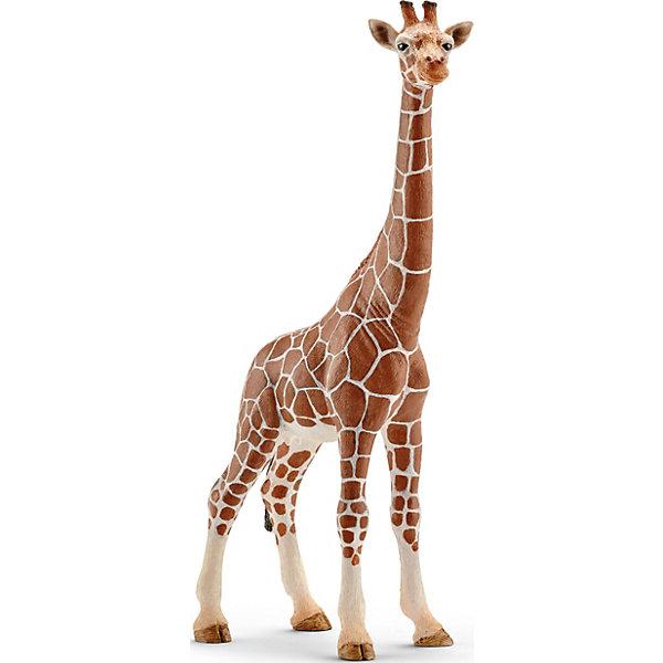 Жираф, самкаМир животных<br>Жираф – самое высокое в мире животное. Питается листьями деревьев и именно поэтому имеет такую длинную шею. Тело окрашено в пятнистый рисунок. На голове имеются симпатичные рожки. <br> <br> В настоящее время жирафа можно встретить на востоке Африки. Жираф исключительно травоядное животное и питается листвой с деревьев, где у него нет конкурентов. Тело покрыто шерстью желтого цвета с коричневыми пятнами на ней, что позволяет маскироваться от хищников. <br> <br> Жираф с длинной шеей и характерной окраской - яркий представитель африканской саваны. Его мощная шея способна выдерживать большие нагрузки и позволяет дотянуться до самых высоких веточек с вкусными листочками. <br><br> Взрослый жираф достигает 6 метров в длину, а чтобы животное могло дотянуться и схватить ветки деревьев, его длинный мускулистый язык способен высовываться на 40 см. <br><br> У жирафа большие круглые глаза и пушистые темные ресницы, которые придают этим необычным животным особую очаровательность. <br> <br> Игрушки животных Schleich выполнены с детальной точностью и раскрашены вручную с учетом маленьких нюансов строения и окраски каждого вида. Работа над каждым представителем вида ведется совместно с Берлинским зоопарком, что обеспечивает превосходное сходство игрушечных фигурок с настоящими представителями животного мира. <br> <br> Фирма Schleich производит игрушки, отвечающие высоким стандартам качества. Фигурки животных выполнены из высококачественного каучукового пластика, не вызывающего аллергии. <br> <br> Ребенок может собрать семью жирафов и наблюдать за их жизнью или познакомиться с другими птицами и животными Африки. Фигурки прекрасно сочетаются друг с другом, можно объединять в игре представителей разных серий Шляйх. Фигурка самого высокого животного на планете от немецкой компании Schleich станет достойным дополнением уникальной коллекции миниатюрных фигурок. <br> <br> Фигурку самка жирафа от фирмы Шляйх Schleich можно купить в нашем интернет магазине с доста