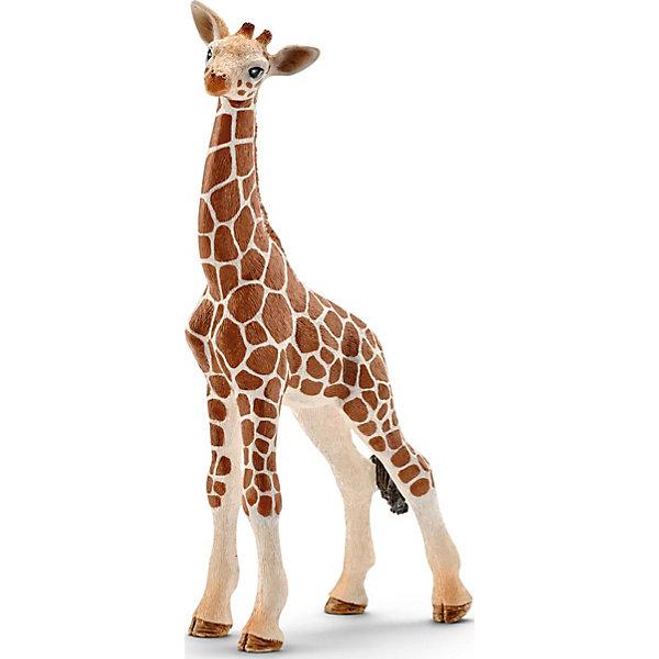 Детеныш жирафаМир животных<br>Детеныш жирафа появляется на свет маленьким, беззащитным существом и очень сильно привязан к своим родителям. Внешне детеныш имеет одно важное отличие от взрослой особи — у него нет рожек. Место, где они вырастут, помечено двумя черными пятнышками. У детеныша, как и у взрослой особи, имеется уникальный рисунок пятен. Он никогда не повторяется, как и отпечатки пальцев у человека. По окрасу животного можно определить к какому виду он принадлежит.<br> <br> Взрослый жираф достигает 6 метров в длину, а чтобы животное могло дотянуться и схватить ветки деревьев, его длинный мускулистый язык способен высовываться на 40 см.<br><br> Детёныш еще пока не способен дотянуться до высоких деревьев, поэтому ищет низкие кустики, щиплет травку, и пьет много воды. Он еще очень маленький и ему тяжело удержаться на своих длинных тоненьких ножках, но он очень энергичный и любознательный.<br> <br> Фирма Schleich производит игрушки, отвечающие высоким стандартам качества. Фигурки животных выполнены из высококачественного каучукового пластика, не вызывающего аллергии.<br> <br> Ребёнку удет интересно собрать всех жирафов и наблюдать за их семейной жизнью или познакомиться с другими птицами и животными Африки. Фигурки прекрасно сочетаются друг с другом, можно объединять в игре представителей разных серий Шляйх. <br> <br> Миниатюрная фигурка самого высокого животного на планете от немецкой компании Schleich станет достойным дополнением уникальной коллекции миниатюрных фигурок.<br> <br> Купить фигурку Детеныш жирафа от Schleich можно в нашем интернет магазине с доставкой в удобное для Вас время!<br>Ширина мм: 167; Глубина мм: 78; Высота мм: 30; Вес г: 30; Возраст от месяцев: 36; Возраст до месяцев: 96; Пол: Унисекс; Возраст: Детский; SKU: 4394586;