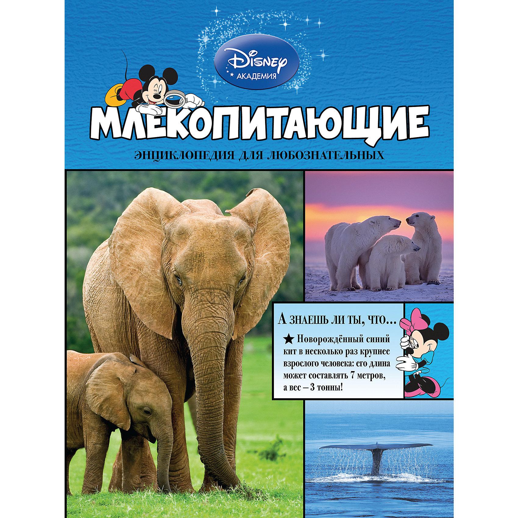 МлекопитающиеГерои Disney приглашают маленьких читателей исследовать окружающий мир! Из этой книги малыши узнают всё самое интересное о львах, кенгуру, обезьянах, жирафах, китах и других млекопитающих животных. Любимые персонажи расскажут о чём воют волки, как отличить африканских слонов от индийских, почему некоторых летучих мышей называют вампирами - и о многом другом. Ребят  ждут не только любопытнейшие факты, изложенные доступным и увлекательным языком, но и большие красочные иллюстрации! Рядом с картинками есть подписи, разъясняющие особенности и назначение той или иной части тела каждого животного. А ещё, благодаря этой книге, маленькие читатели разовьют познавательные способности, кругозор и структурное мышление, получат первый опыт работы с энциклопедической литературой.<br><br>Дополнительная информация:<br><br>- Редактор: Жилинская А.<br>- Формат: 29х21,7 см.<br>- Переплет: твердый.<br>- Количество страниц: 64. <br>- Иллюстрации: цветные.<br><br>Книгу Млекопитающие можно купить в нашем магазине.<br><br>Ширина мм: 280<br>Глубина мм: 210<br>Высота мм: 10<br>Вес г: 466<br>Возраст от месяцев: 36<br>Возраст до месяцев: 72<br>Пол: Унисекс<br>Возраст: Детский<br>SKU: 4414949