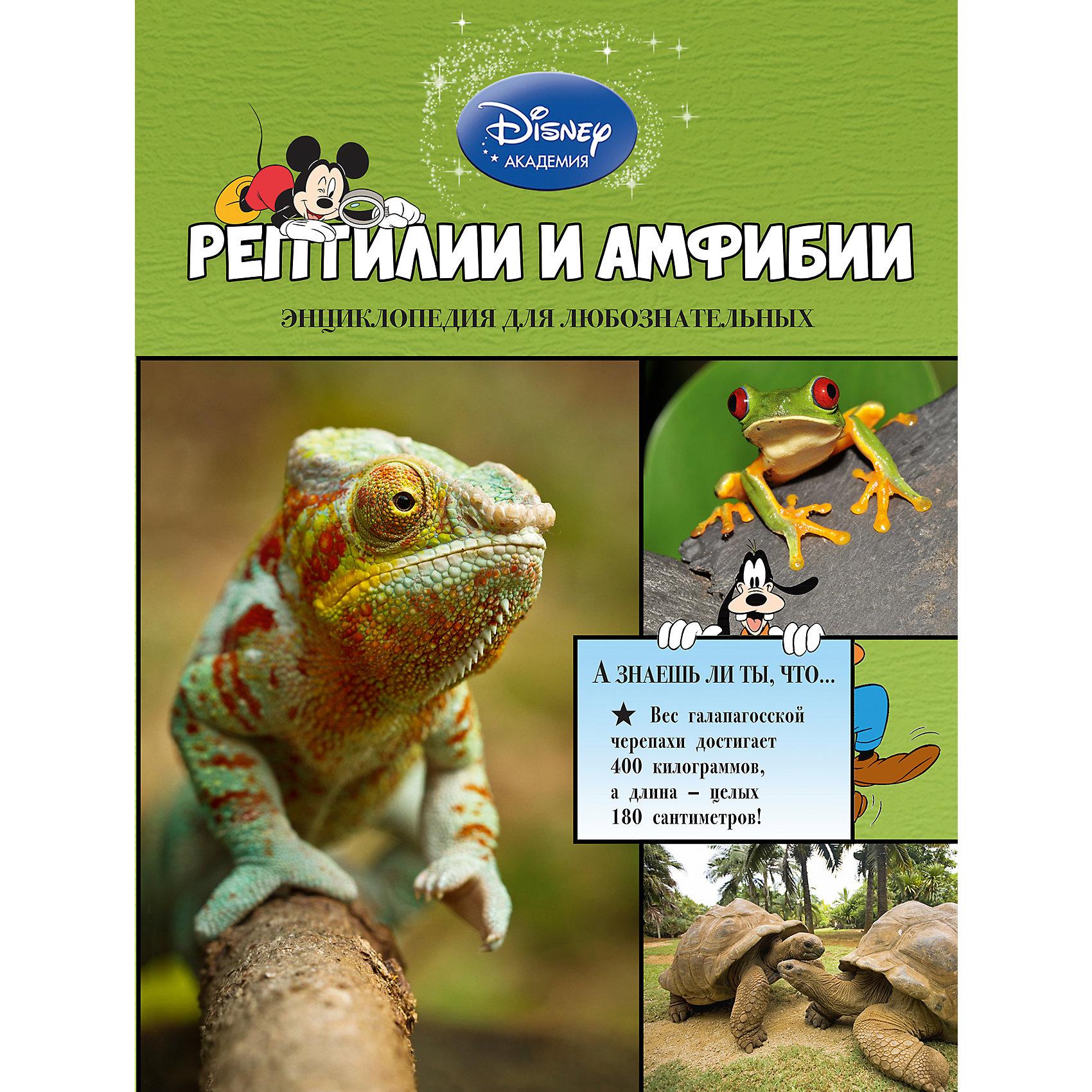 Первая энциклопедия Рептилии и амфибии, DisneyГерои Disney приглашают маленьких читателей исследовать окружающий мир. Из этой книги малыши узнают всё самое интересное о хамелеонах, гекконах, черепахах, змеях, лягушках, крокодилах и других невероятных рептилиях и амфибиях. Любимые персонажи расскажут, почему ящерицы отбрасывают хвосты, зачем грифовым черепашкам ярко-розовые языки, кто из саламандр дышит кожей - и о многом другом. Ребят  ждут не только любопытнейшие факты, изложенные доступным и увлекательным языком, но и большие красочные иллюстрации. Рядом с картинками есть подписи, разъясняющие особенности и назначение той или иной части тела каждого животного. А ещё, благодаря этой книге, маленькие читатели разовьют познавательные способности, кругозор и структурное мышление, получат первый опыт работы с энциклопедической литературой.<br><br>Дополнительная информация:<br><br>- Редактор: Жилинская А.<br>- Формат: 29х21,7 см.<br>- Переплет: твердый.<br>- Количество страниц: 64. <br>- Иллюстрации: цветные.<br><br>Книгу Рептилии и амфибии можно купить в нашем магазине.<br><br>Ширина мм: 280<br>Глубина мм: 210<br>Высота мм: 10<br>Вес г: 454<br>Возраст от месяцев: 72<br>Возраст до месяцев: 84<br>Пол: Унисекс<br>Возраст: Детский<br>SKU: 4414952