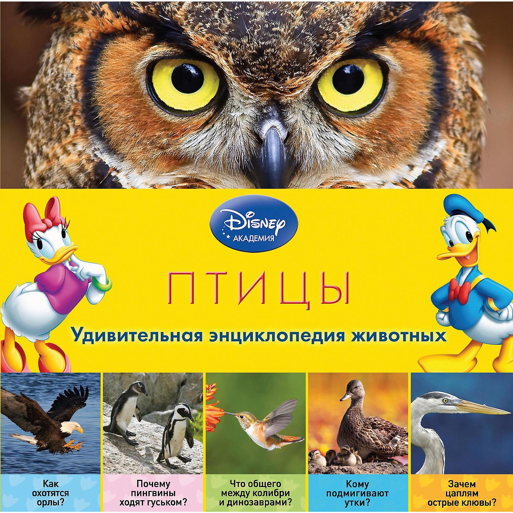 Первая энциколпедия Птицы, DisneyГерои Disney приглашают маленьких читателей в чудесный мир птиц! В компании любимых персонажей ребёнок узнает о том, зачем птичкам перья и клювы, как они вьют гнёзда, почему страусы прячут головы в песок, бывают ли подземные пернатые… Малыша ждут не только любопытнейшие факты, изложенные доступным и увлекательным языком, но и восхитительные фотографии – большие, яркие и красочные! Благодаря этой книге, ребёнок разовьёт познавательные способности, кругозор и структурное мышление, а также получит первый опыт работы с энциклопедической литературой.<br><br>Дополнительная информация:<br><br>- Переводчик: Тихменева М.<br>- Редактор: Жилинская А.<br>- Формат: 21,5х21,5 см.<br>- Переплет: твердый.<br>- Количество страниц: 40 <br>- Иллюстрации: цветные.<br><br>Книгу Птицы (2-е издание) можно купить в нашем магазине.<br><br>Ширина мм: 210<br>Глубина мм: 210<br>Высота мм: 8<br>Вес г: 324<br>Возраст от месяцев: 36<br>Возраст до месяцев: 72<br>Пол: Унисекс<br>Возраст: Детский<br>SKU: 4414961